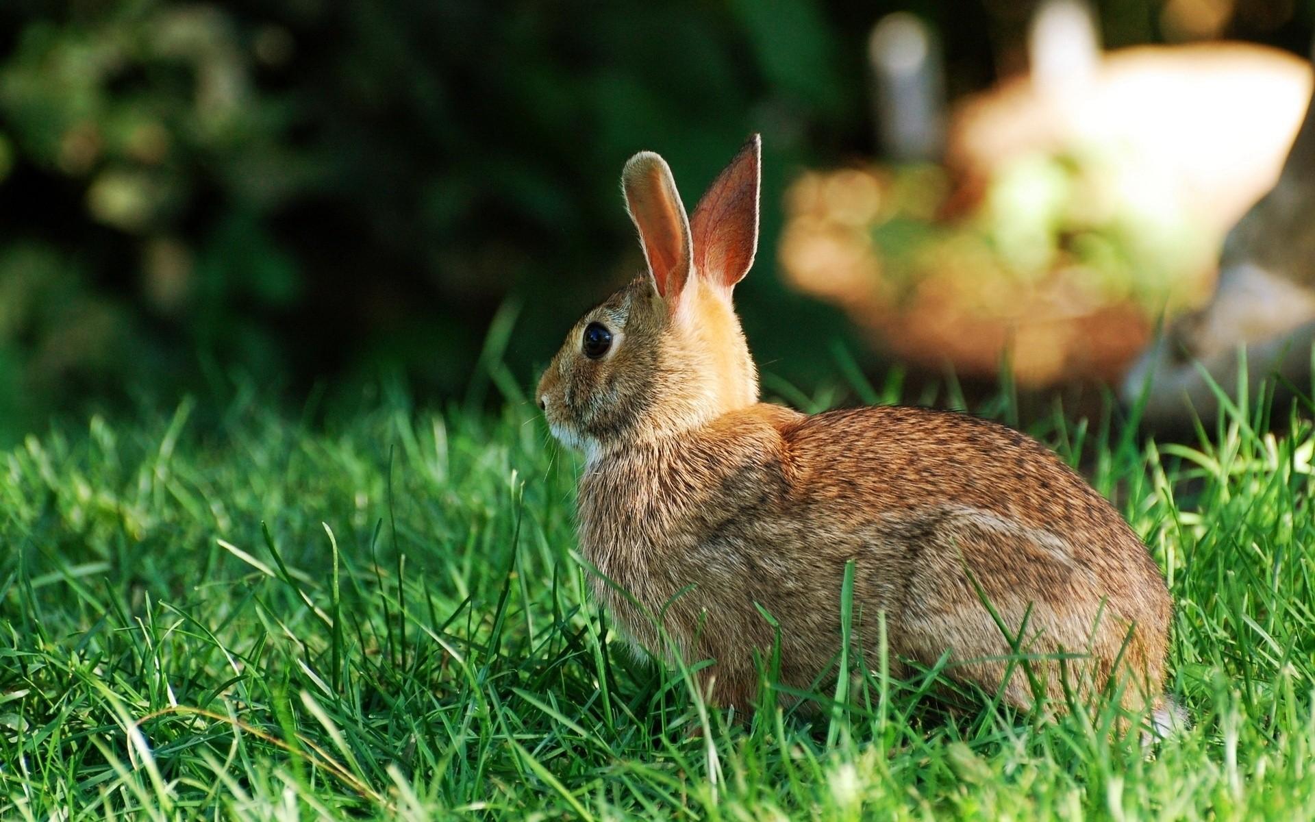 кролик трава  № 1964045 бесплатно