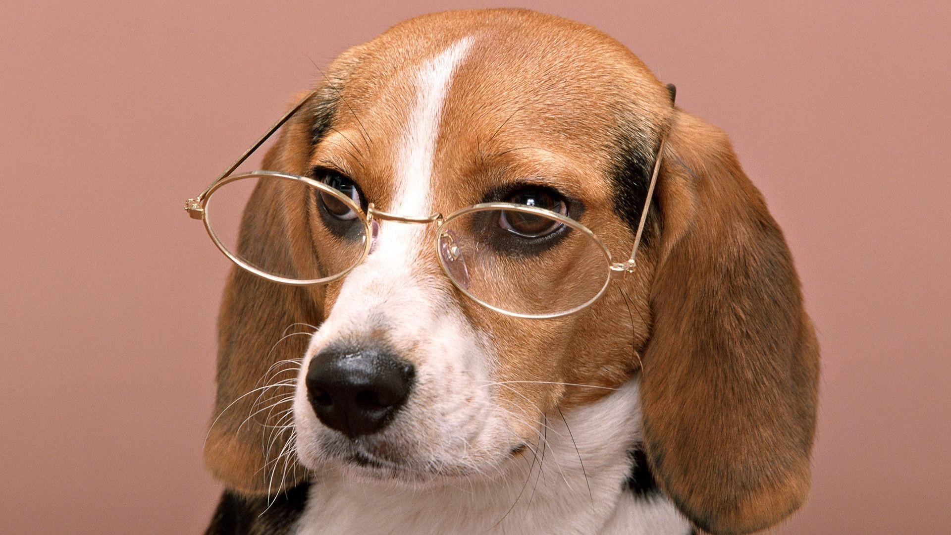Прикольные картинки для рабочего стола собачки, текст поздравление открытку