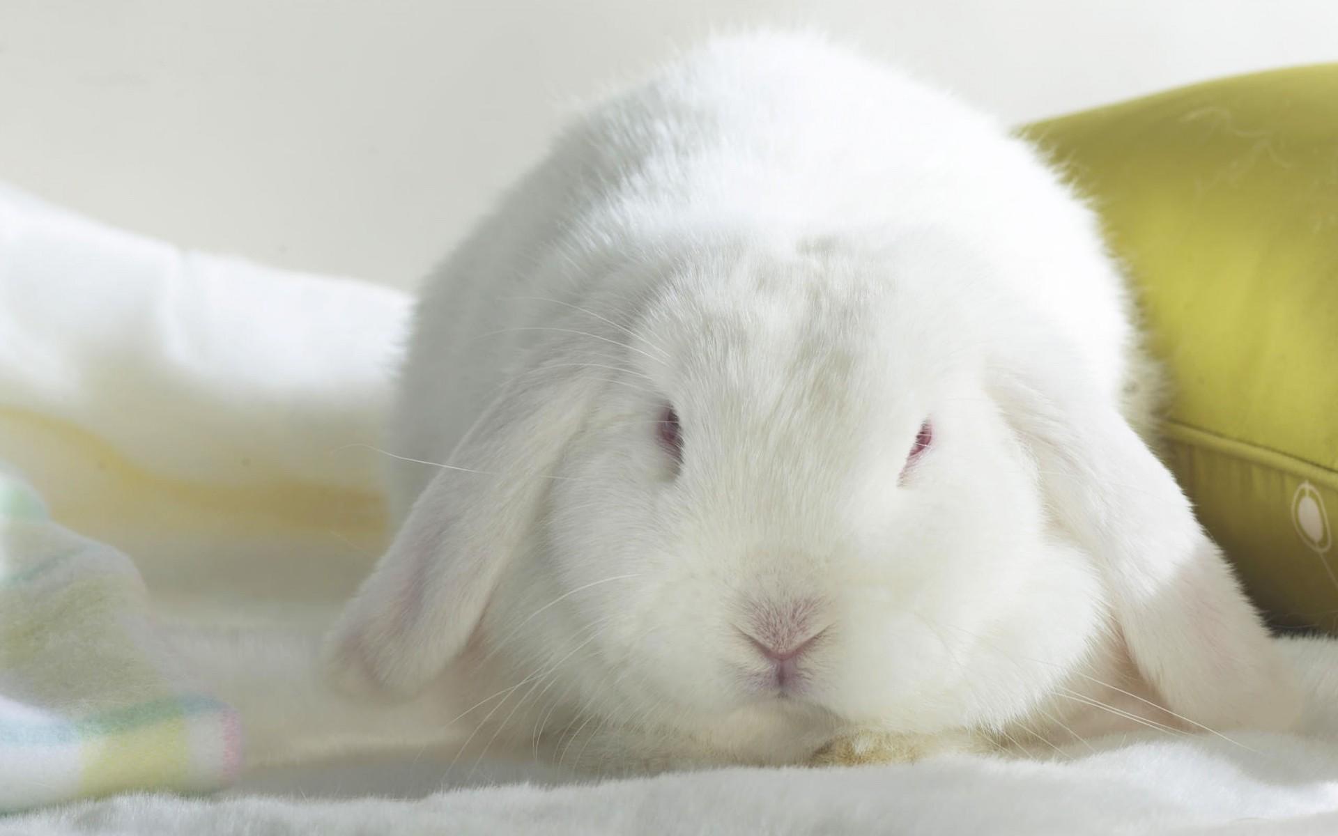 Мая, открытка белые кролики