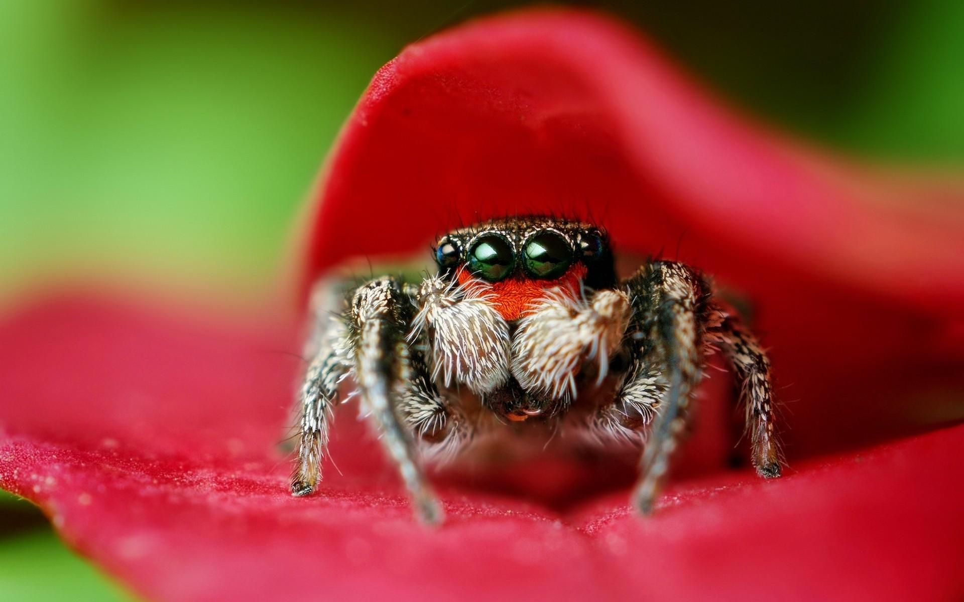 любом фото паука в высоком разрешении диггеры