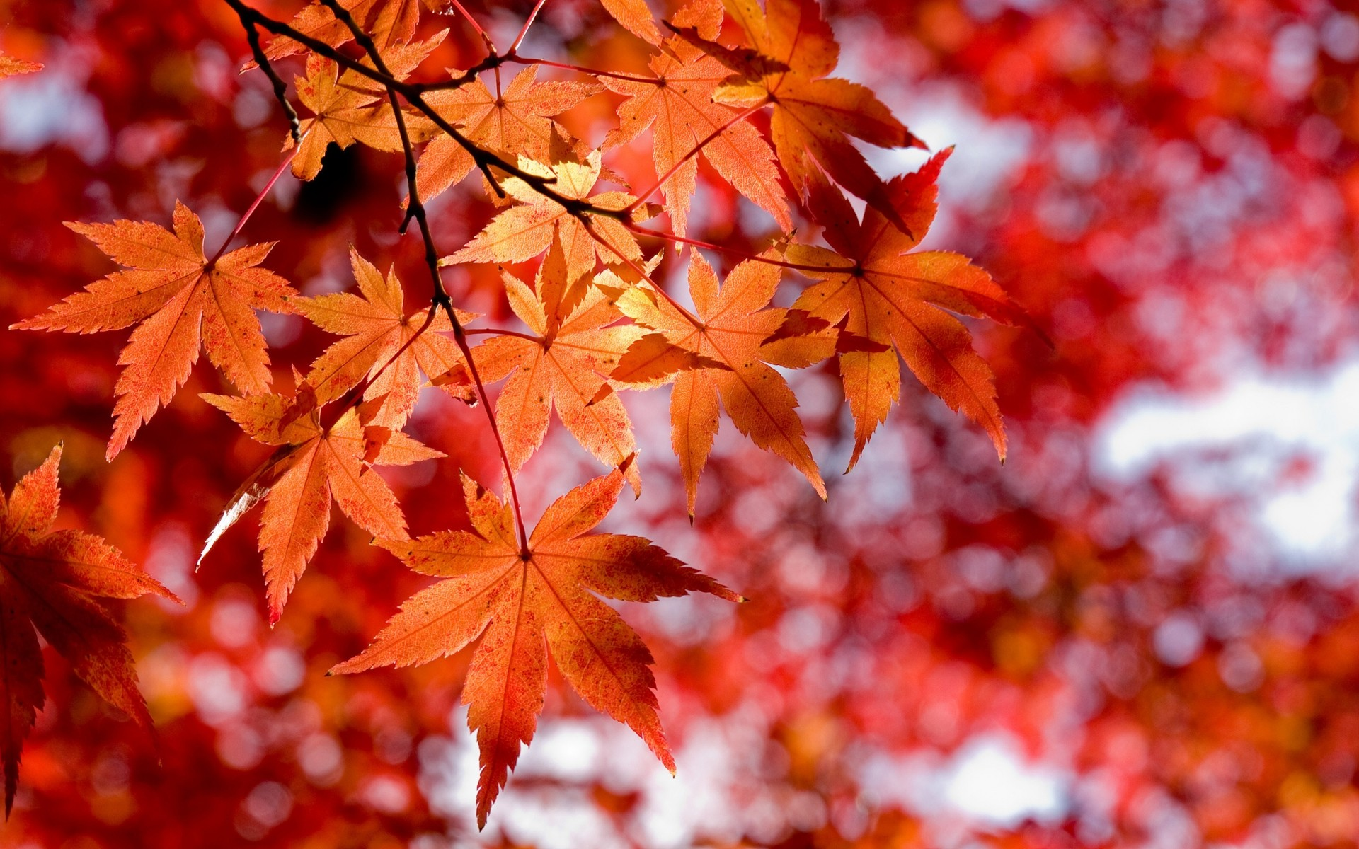 красивые картинки про осень на рабочий стол смогут