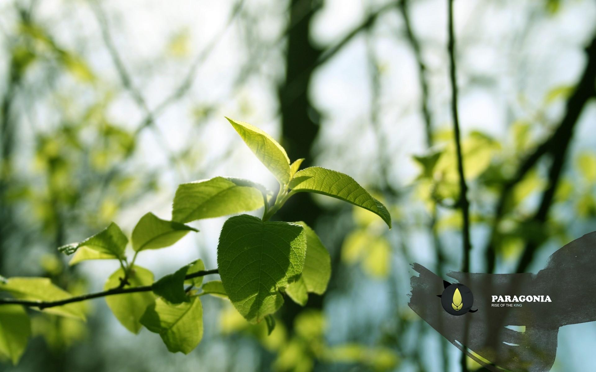 природа листья весна  № 3899912 бесплатно