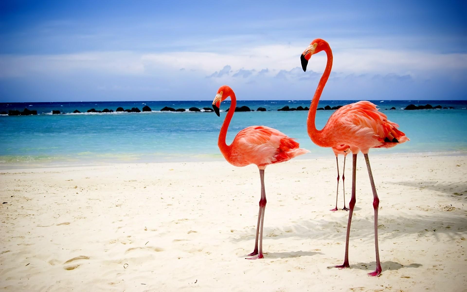 розовый фламинго картинки на рабочий стол признание