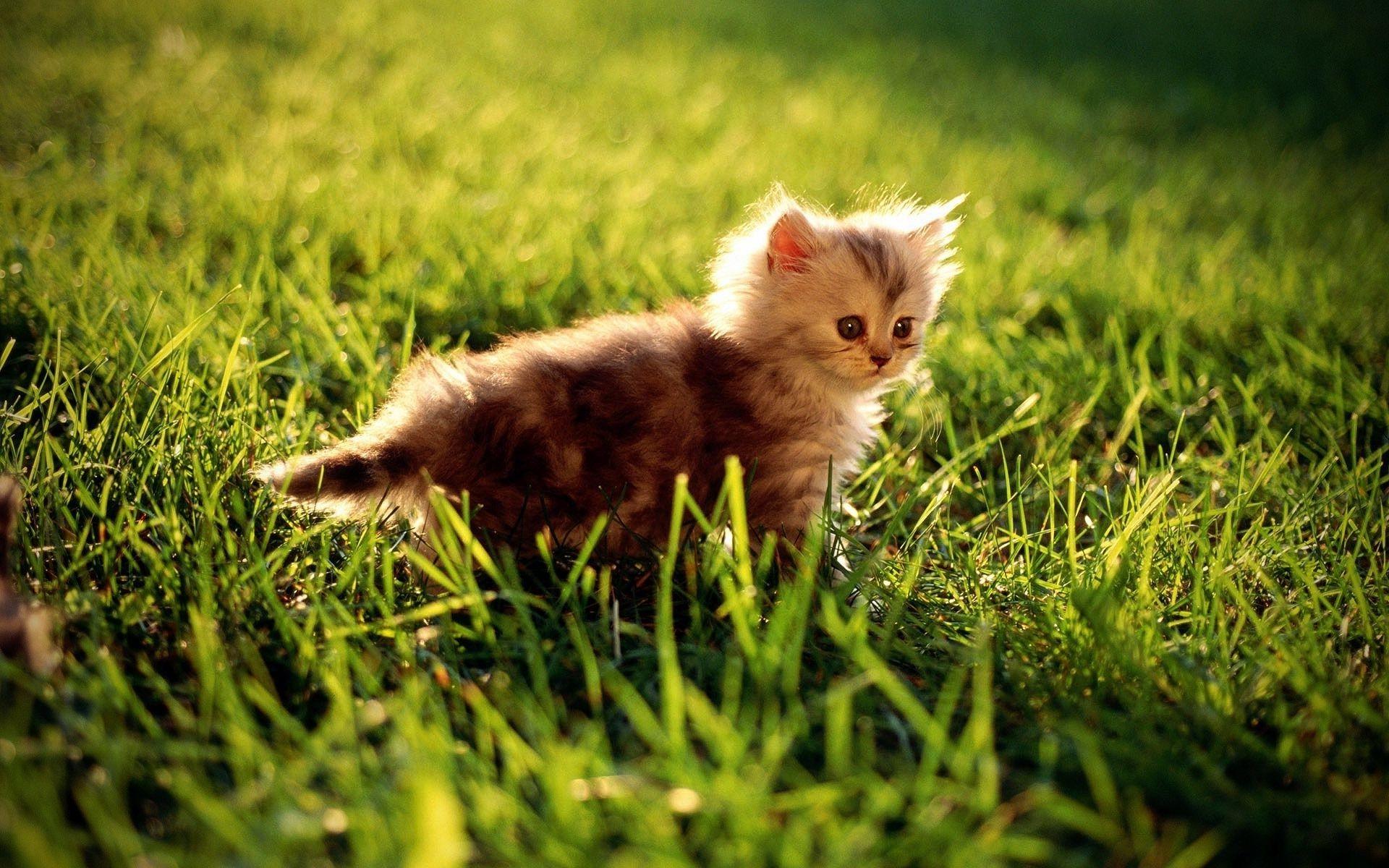 Котенок играющий с кошкой в траве  № 1994922 бесплатно