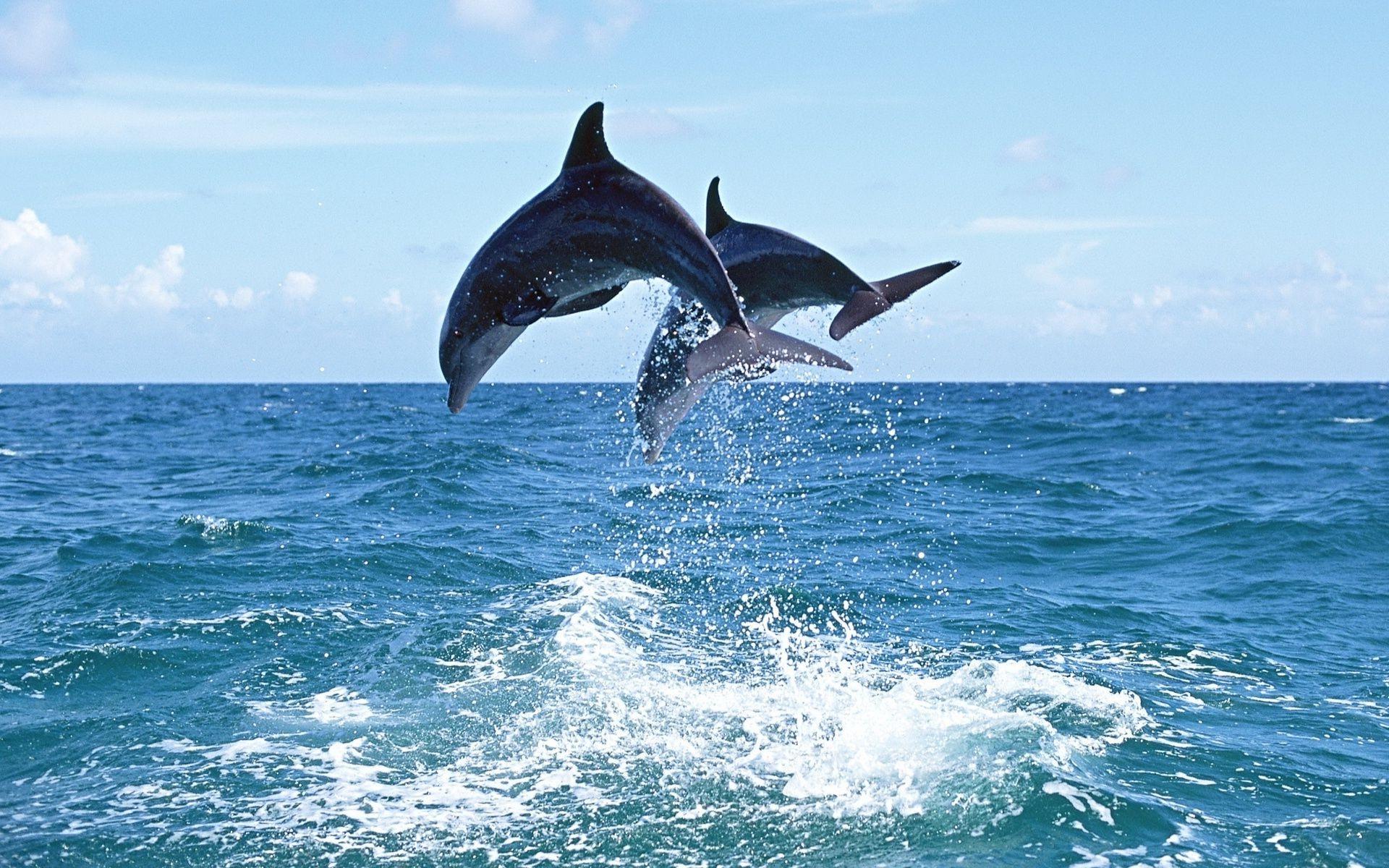 Лучшему тренеру, картинки море и дельфины на телефон