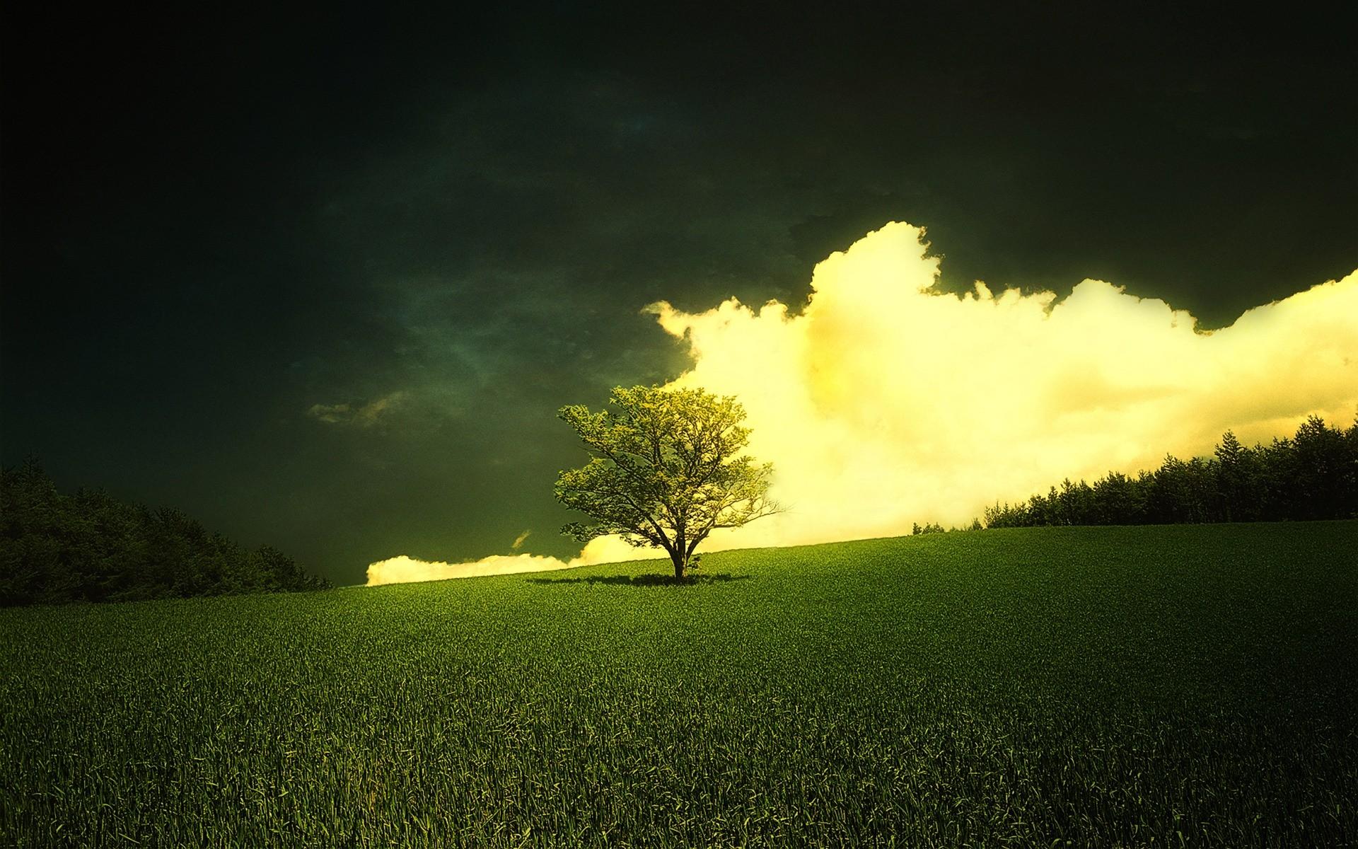 природа деревья горизонт трава бесплатно