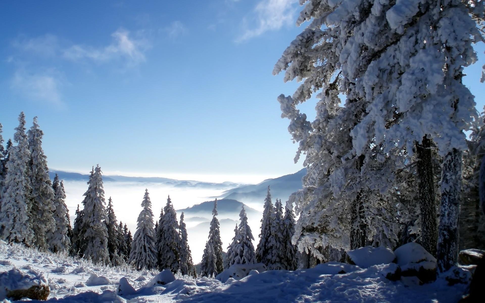 гора снег ели зима mountain snow ate winter бесплатно