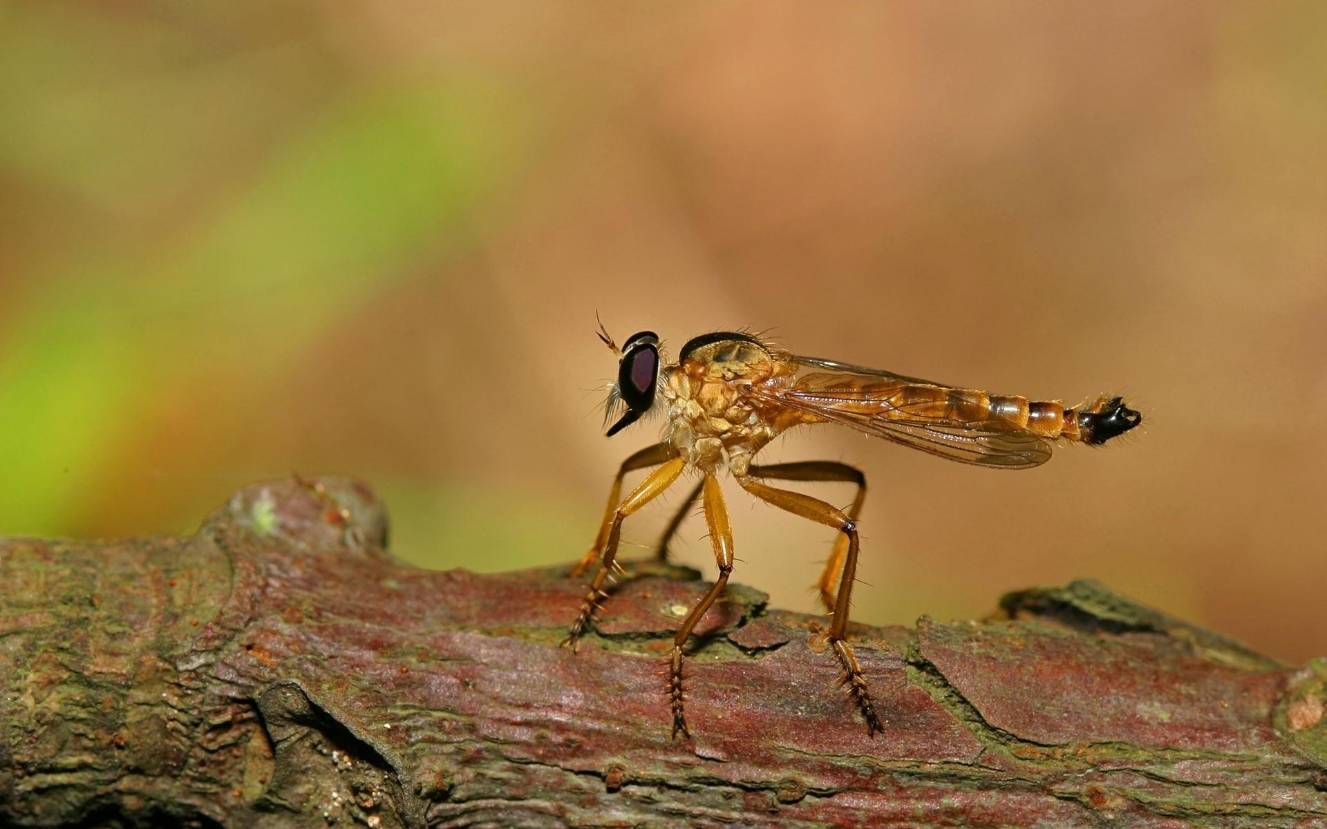 природа макро животные насекомое стрекоза  № 2748006  скачать
