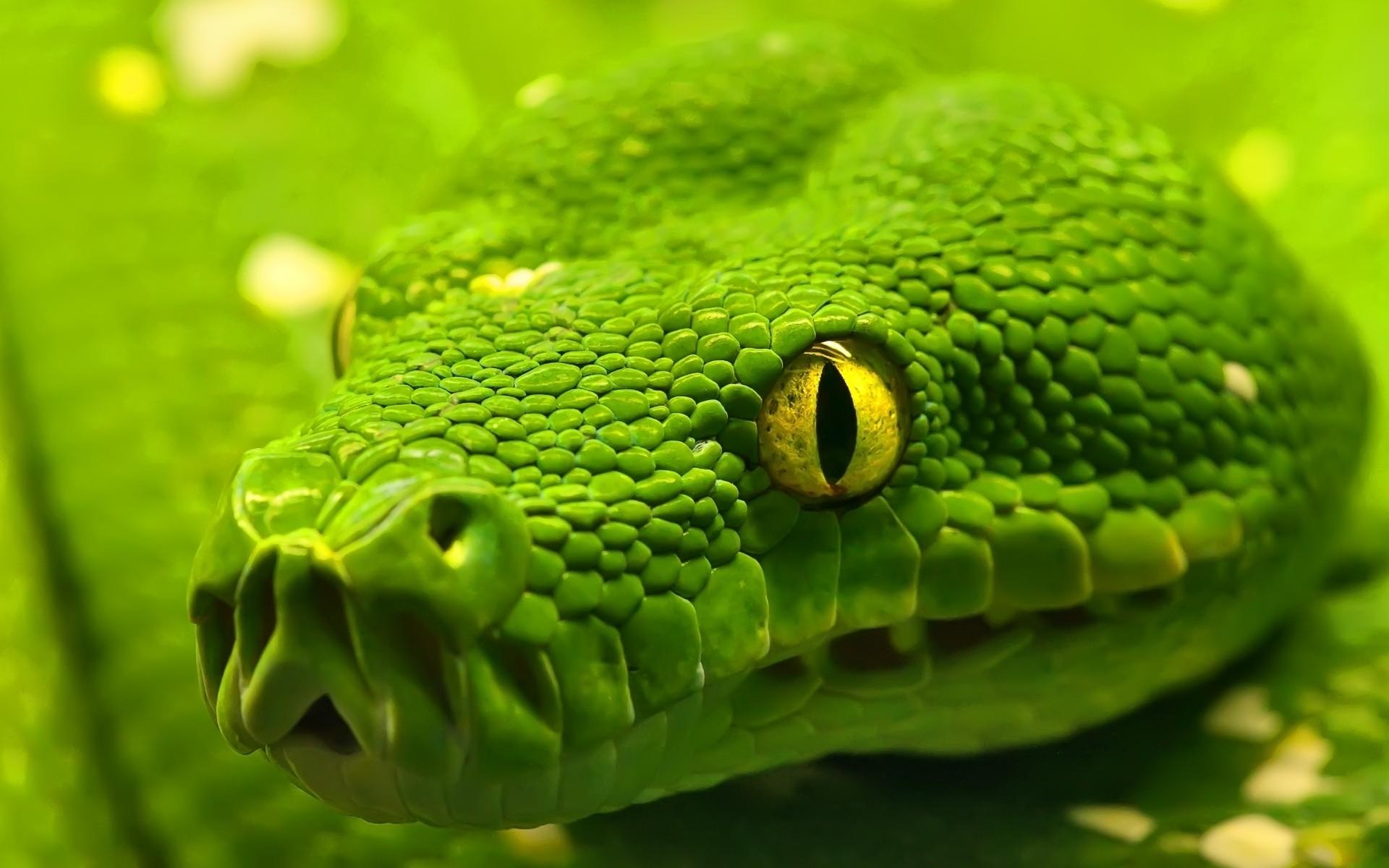 Зеленая змейка