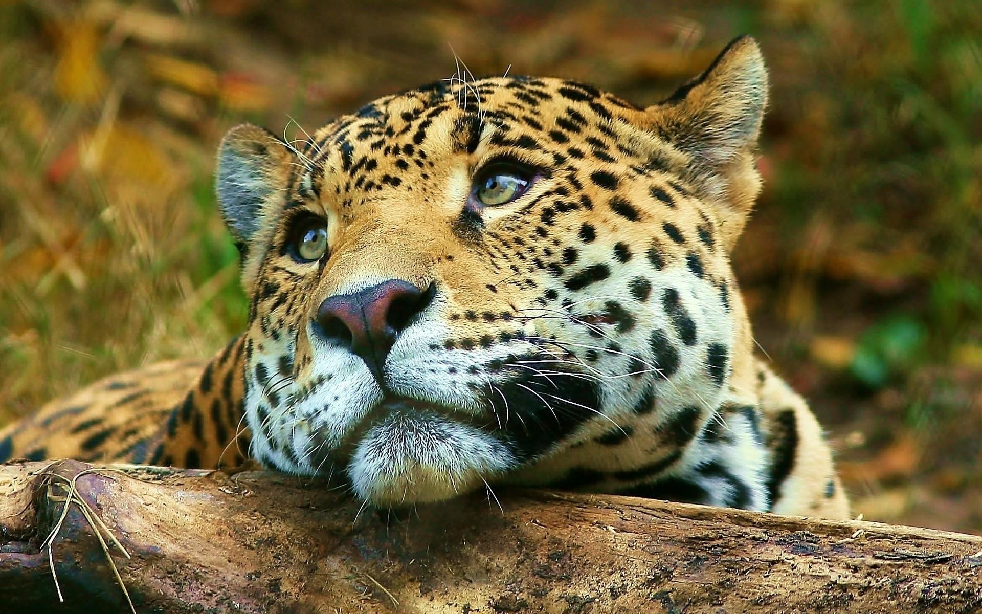 Картинки обои на телефон самые красивые животные в мире