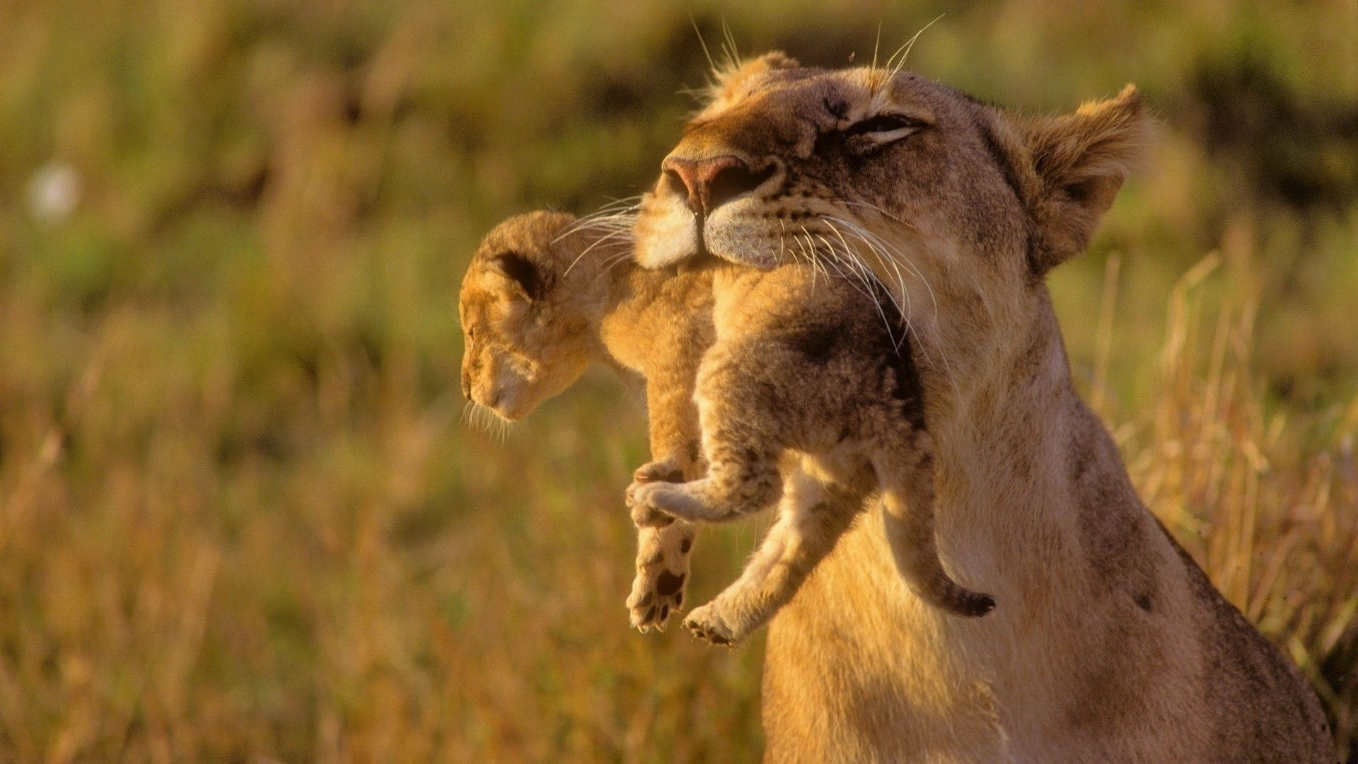 Baby african animals