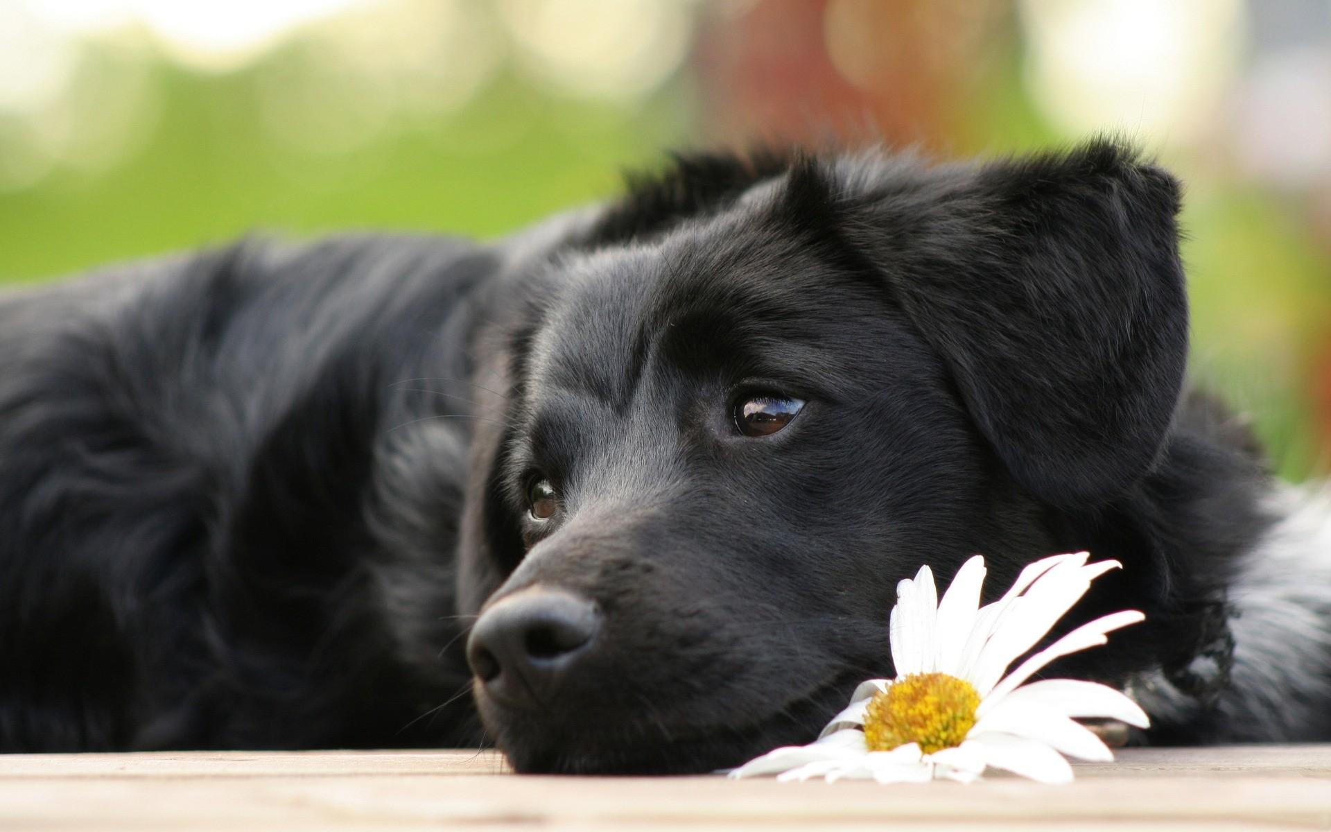картинки на обои рабочего стола с собаками лицензионному соглашению