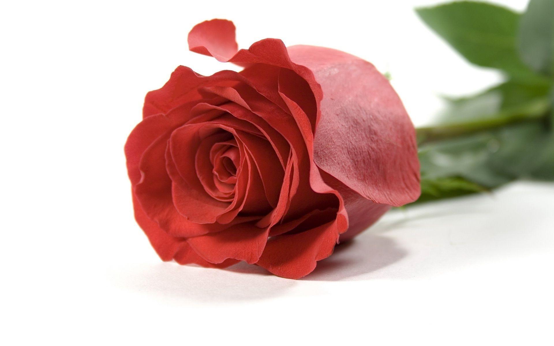 Белые цветы на красном фоне