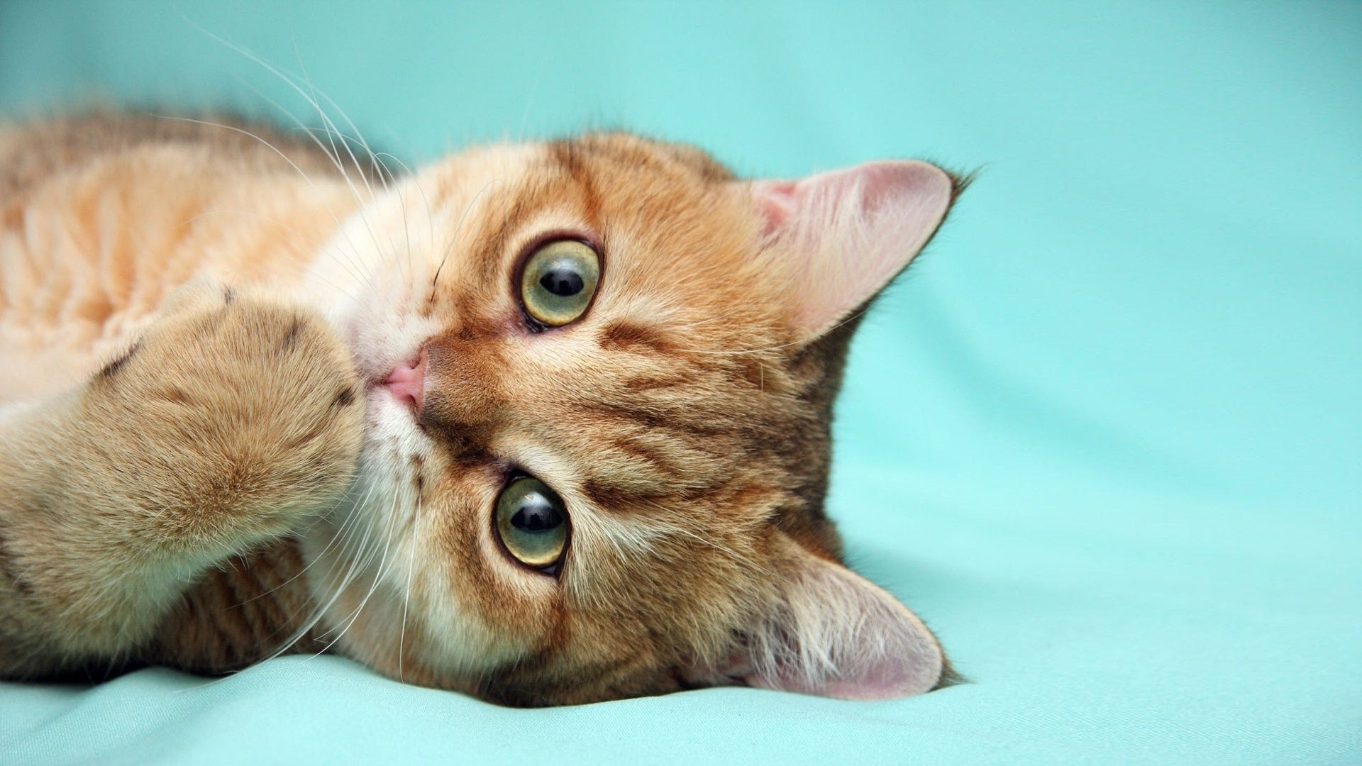 нет картинки с кошками красивые на рабочий стол название бад
