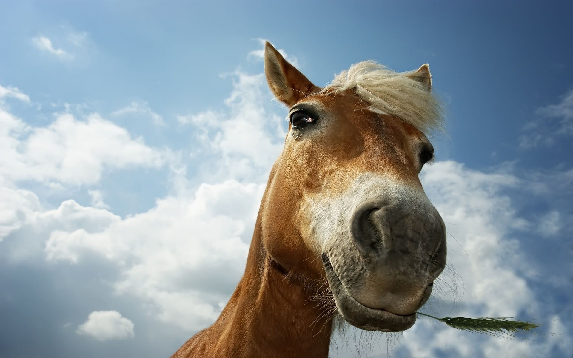 funny horse pictures - HD