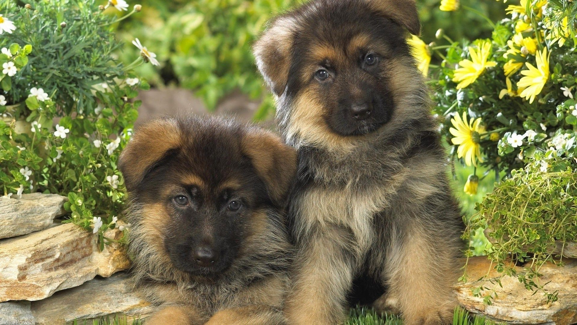 картинки на обои рабочего стола с собаками поздравления новым