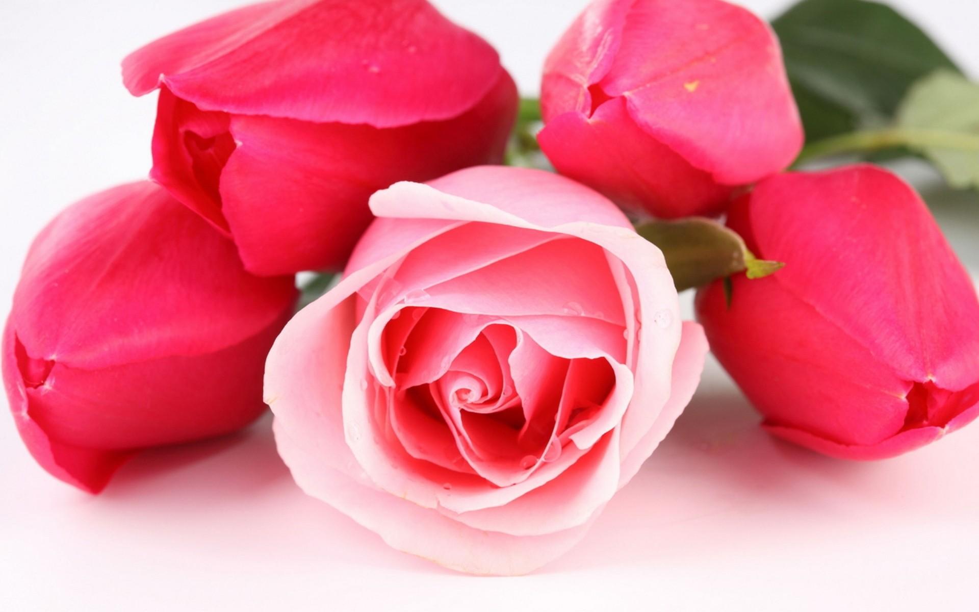 Красивые картинки с цветами для любимой