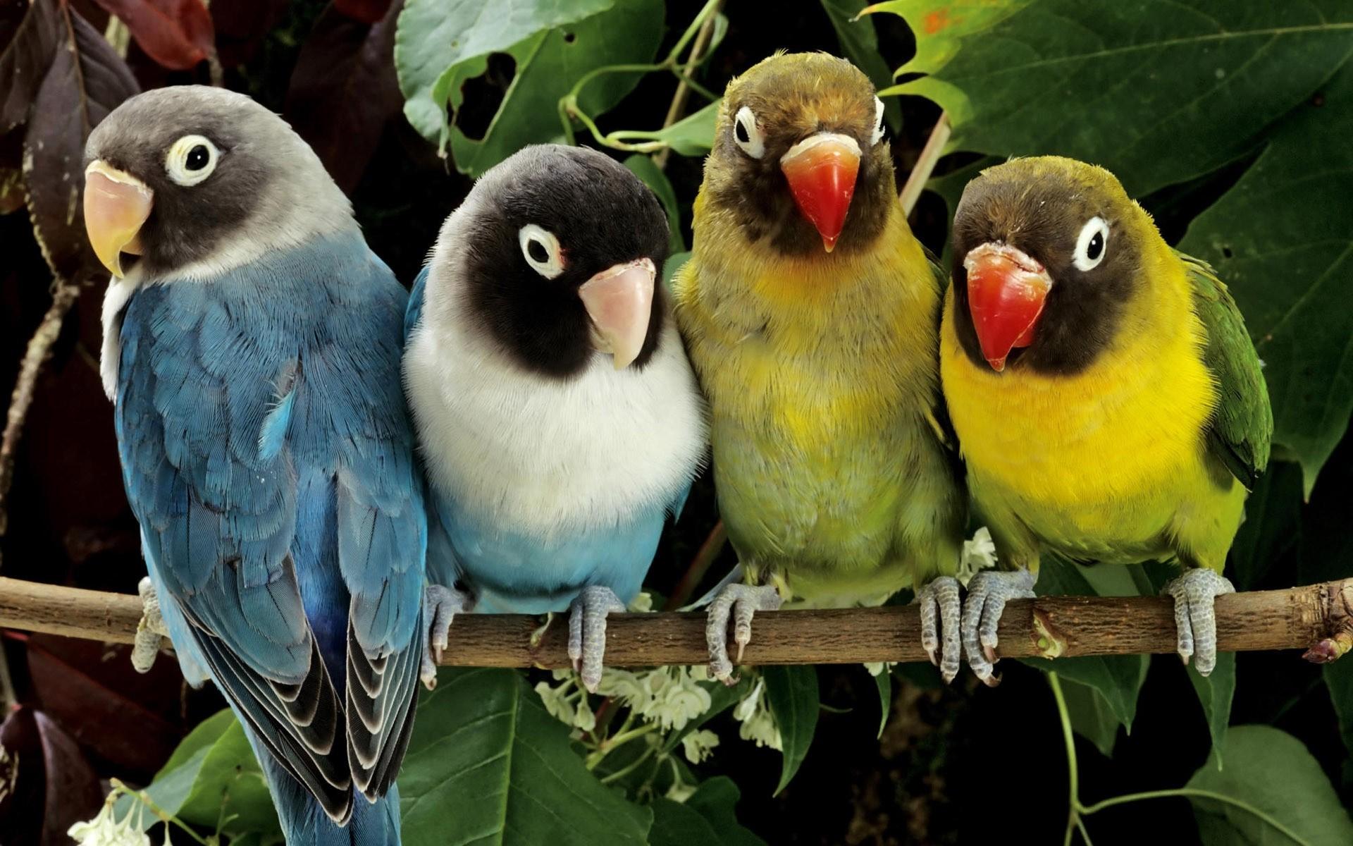 изображение птиц на фото картинках него