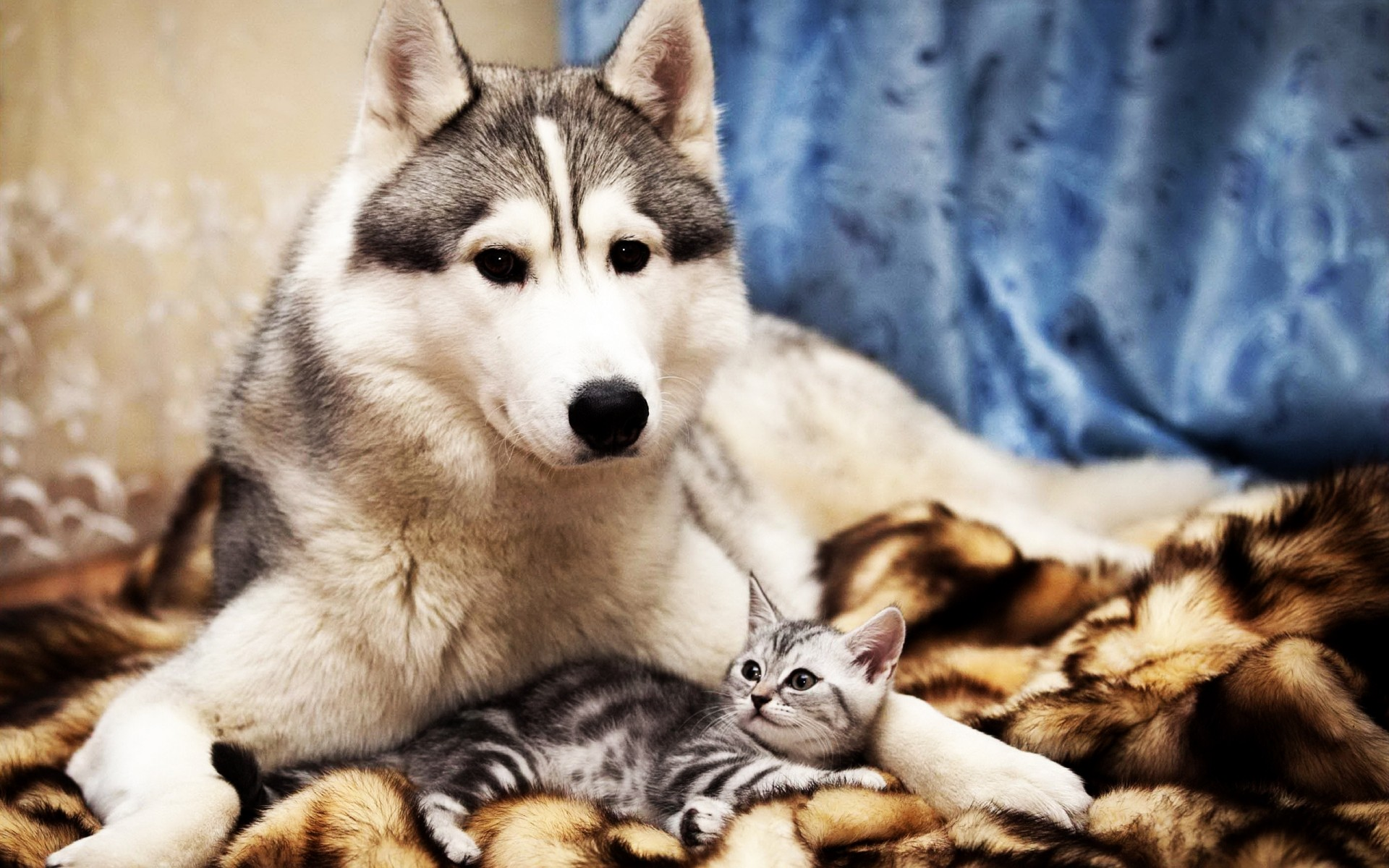 Домашние животные обои на рабочий стол
