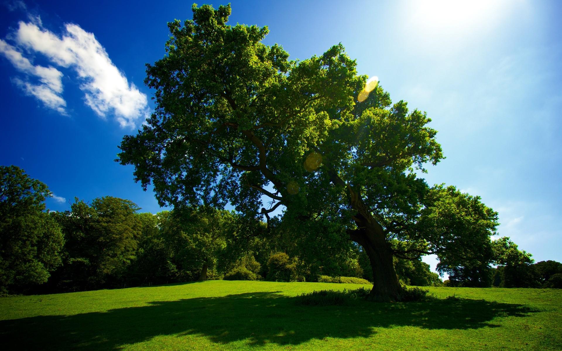 Днем, картинки красивые небо природа зеленая деревья