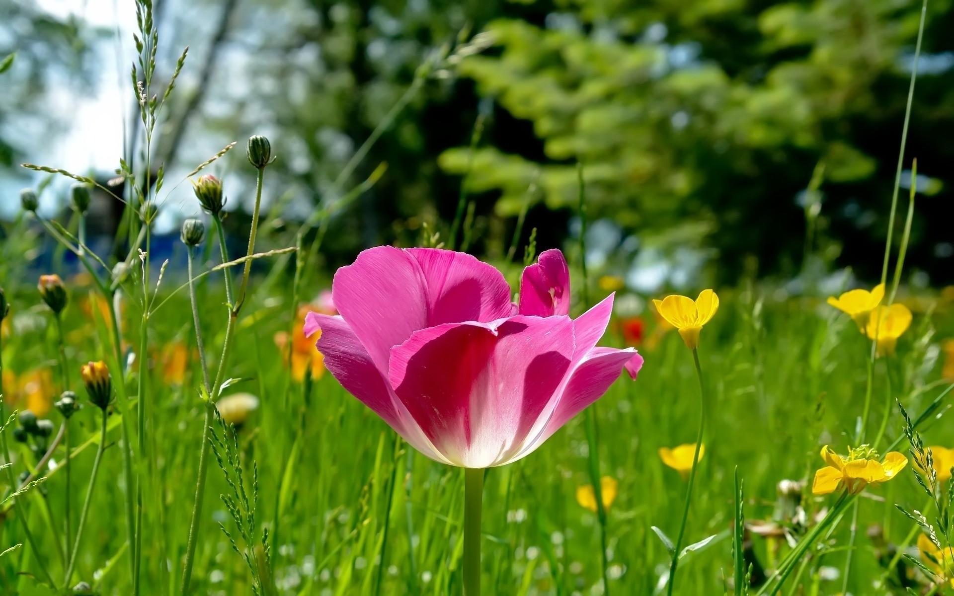 обои на рабочий стол весна лето цветы блюдо можно