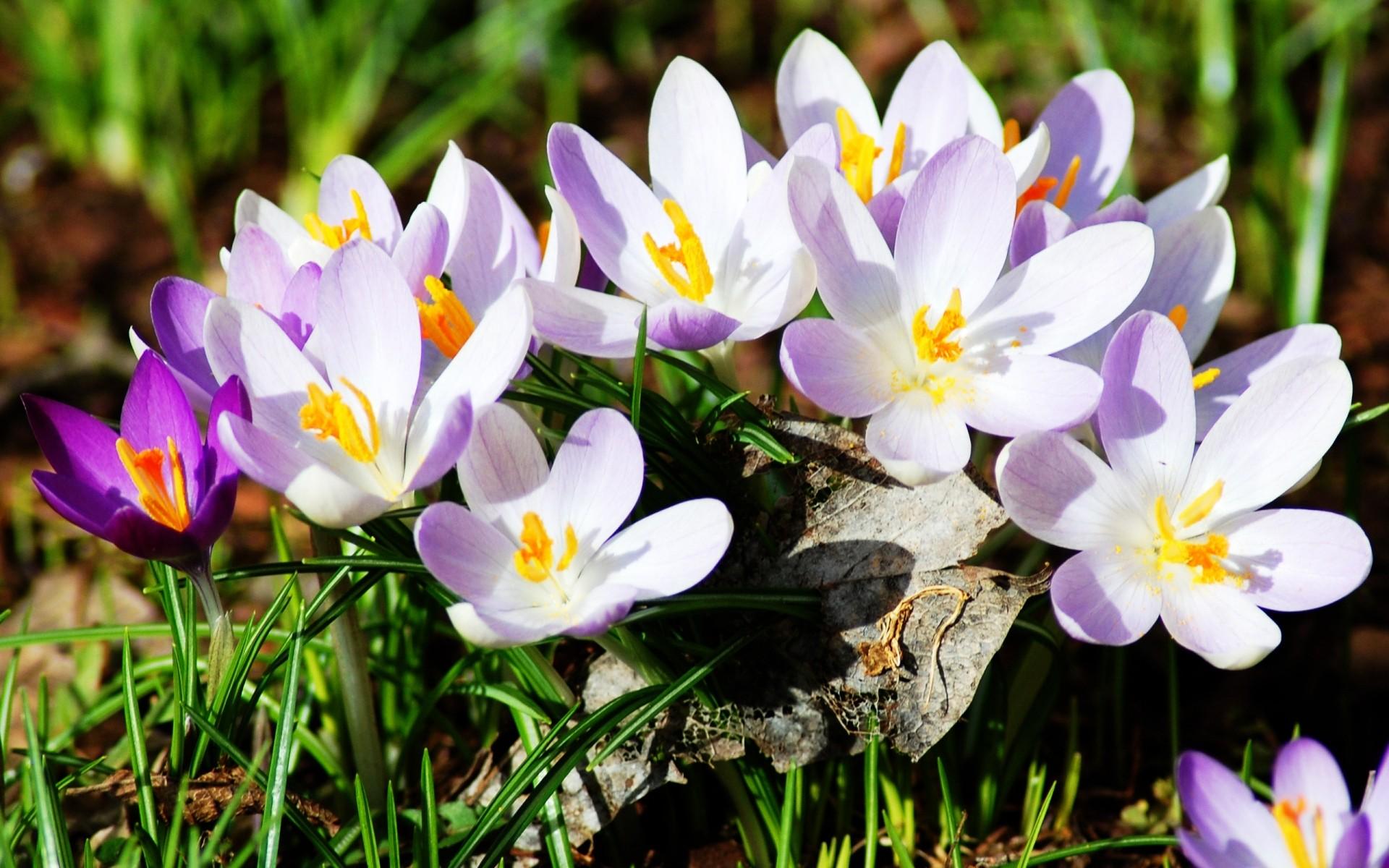 Пожелания, картинки красивая весна на рабочий стол
