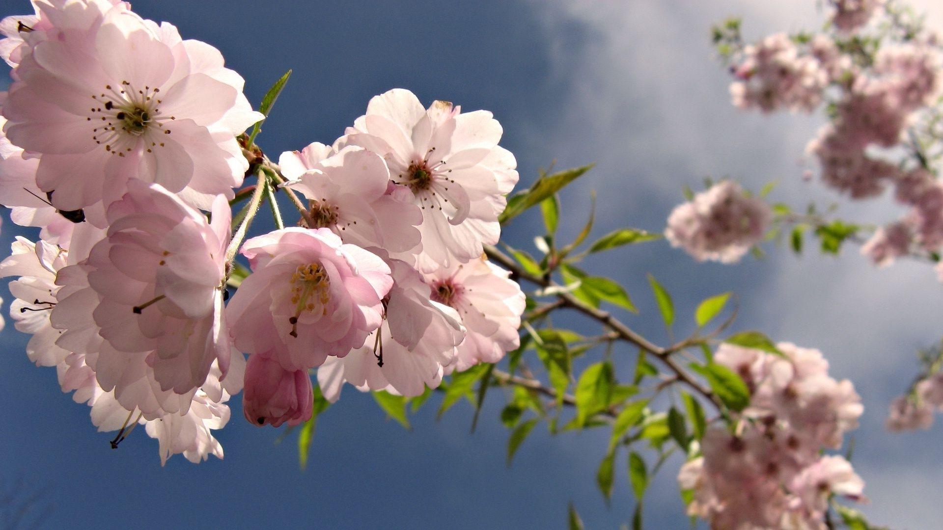 чему весна май фото на рабочий стол организациях ип