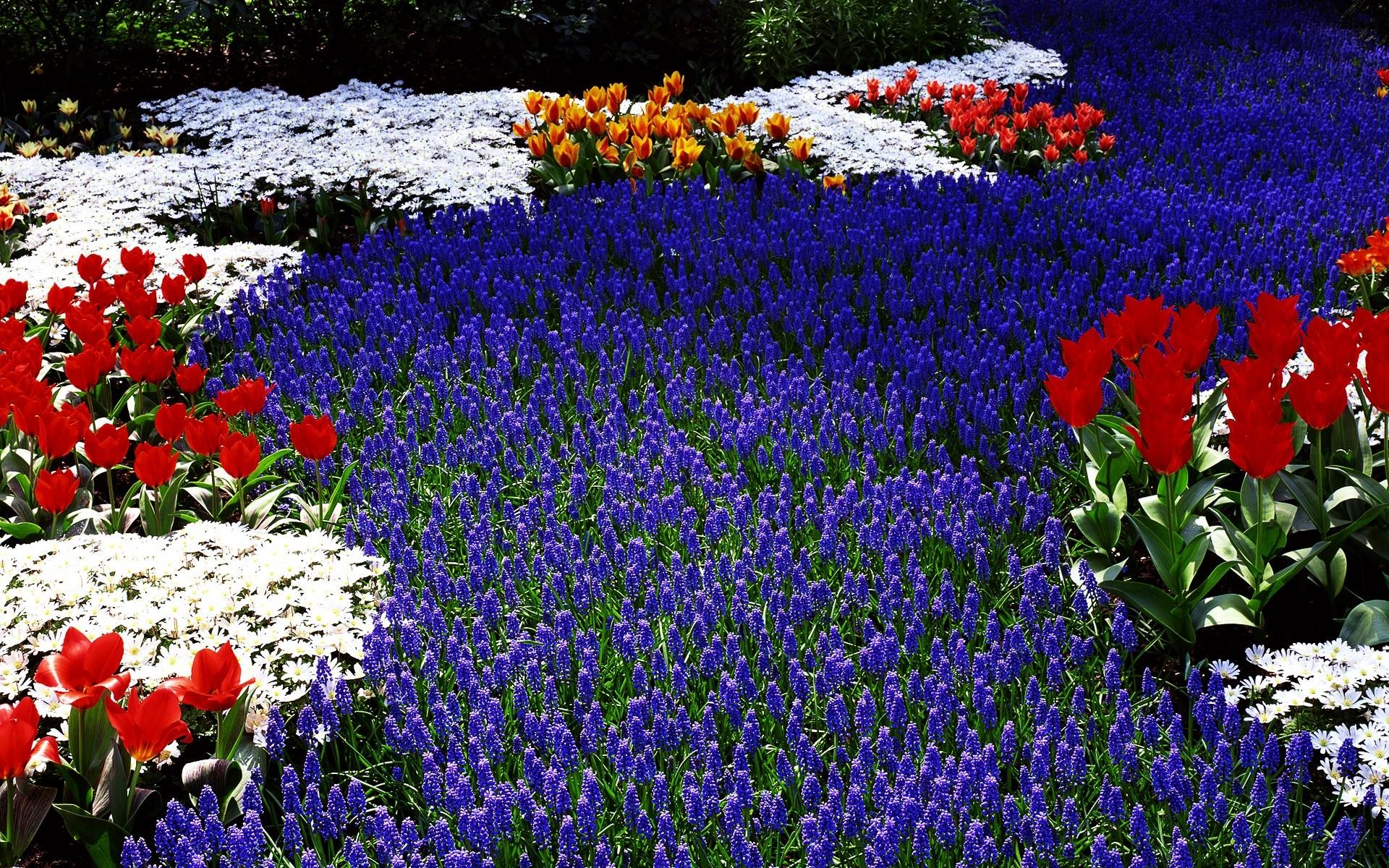 Цветы весной фото на рабочий стол большие