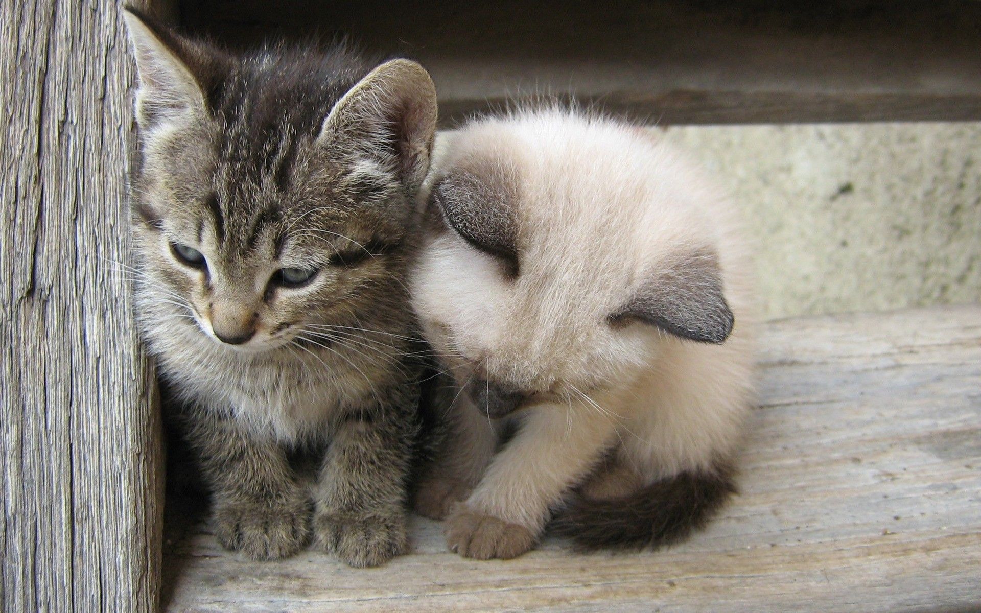 Открытка, картинки маленькие смешные котята