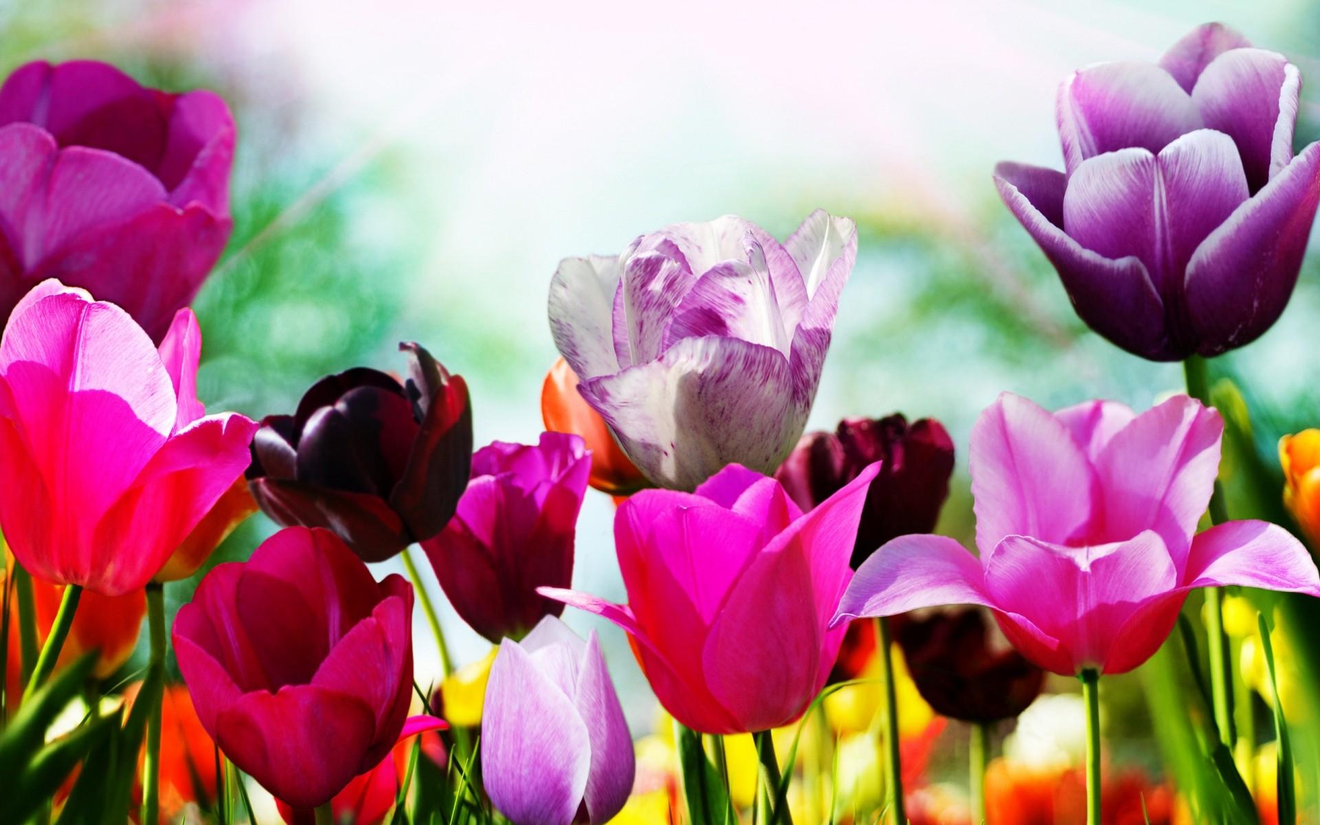 картинки природы цветами