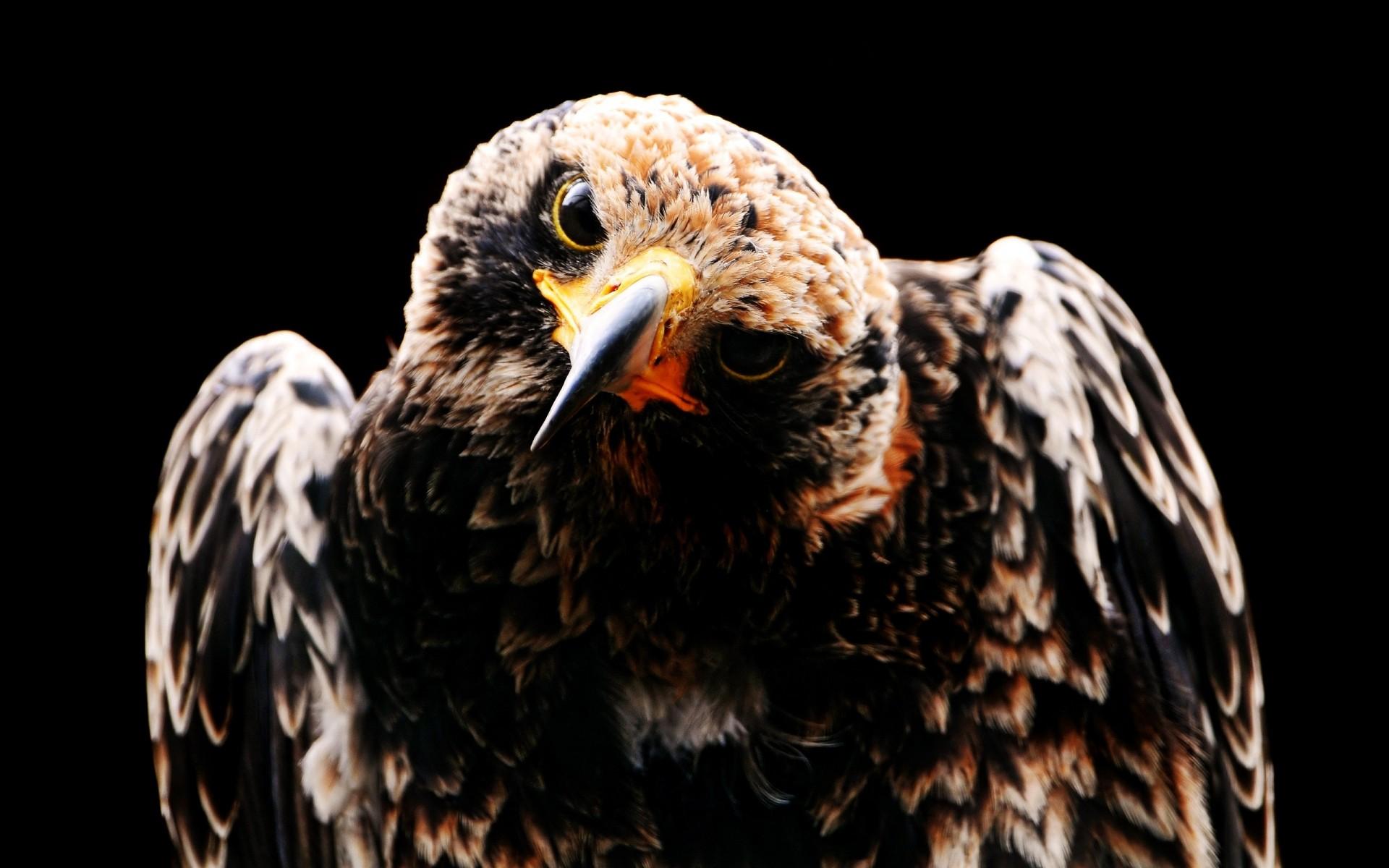 Самые прикольные фото птиц легкий