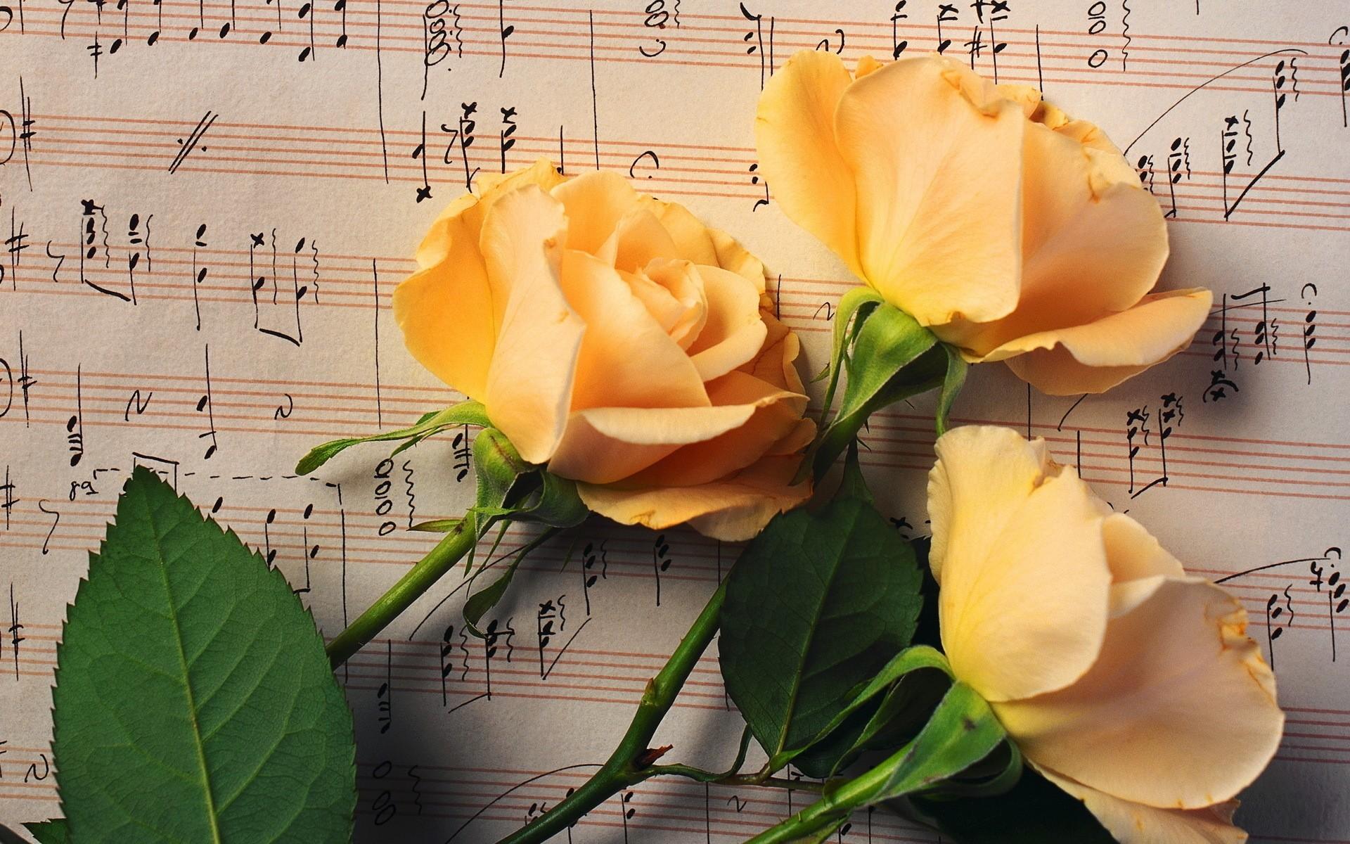 Цветы и женщина картинки с надписями, страничку интернета