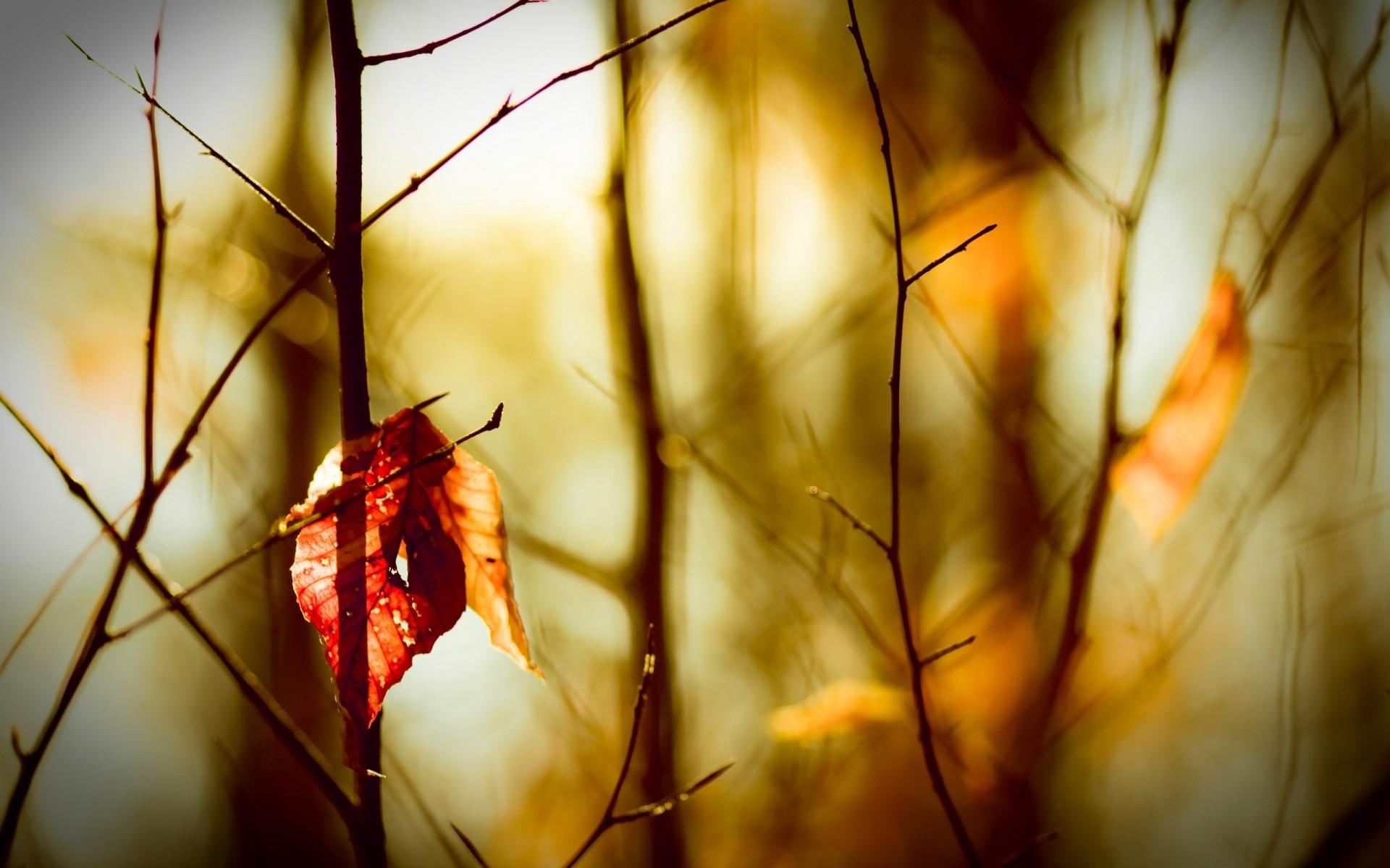 Картинки грустное настроение осень, картинки