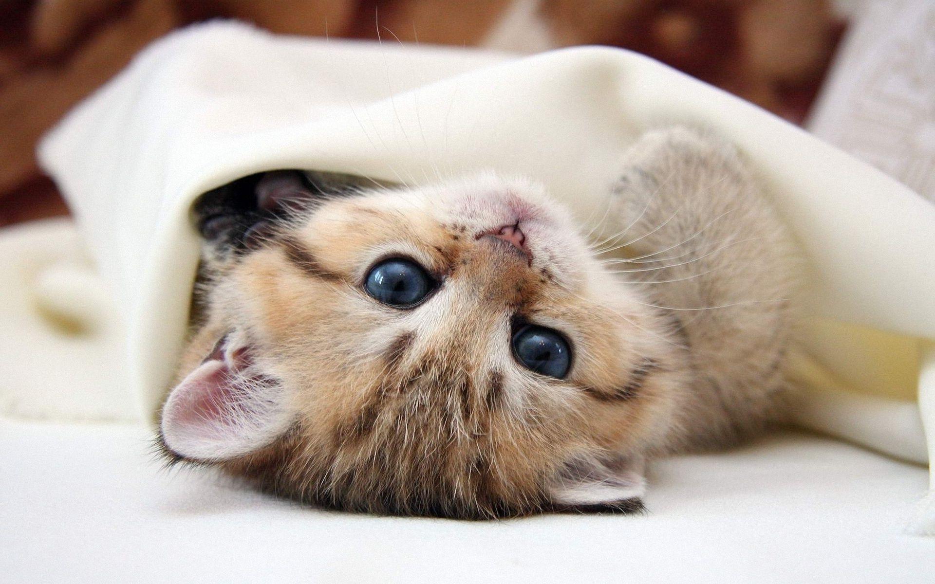 актриса часто картинки на рабочий стол коты няшные можно сэкономить ехать