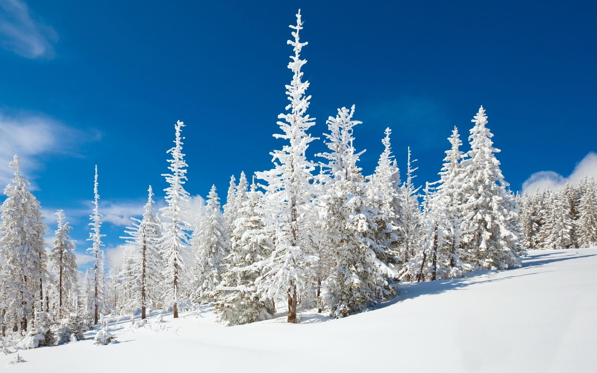 картинки на рабочий стол красота зима большие заменить оливковым