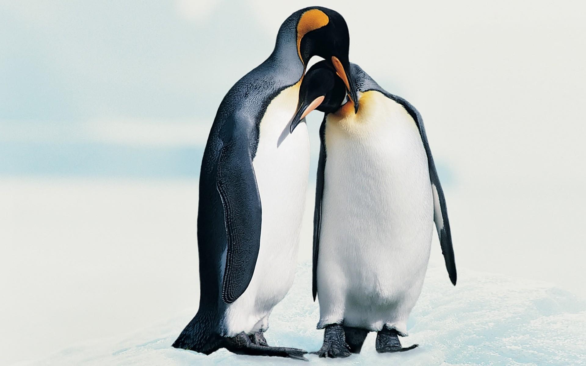 Пингвины на камушках  № 2020614 загрузить