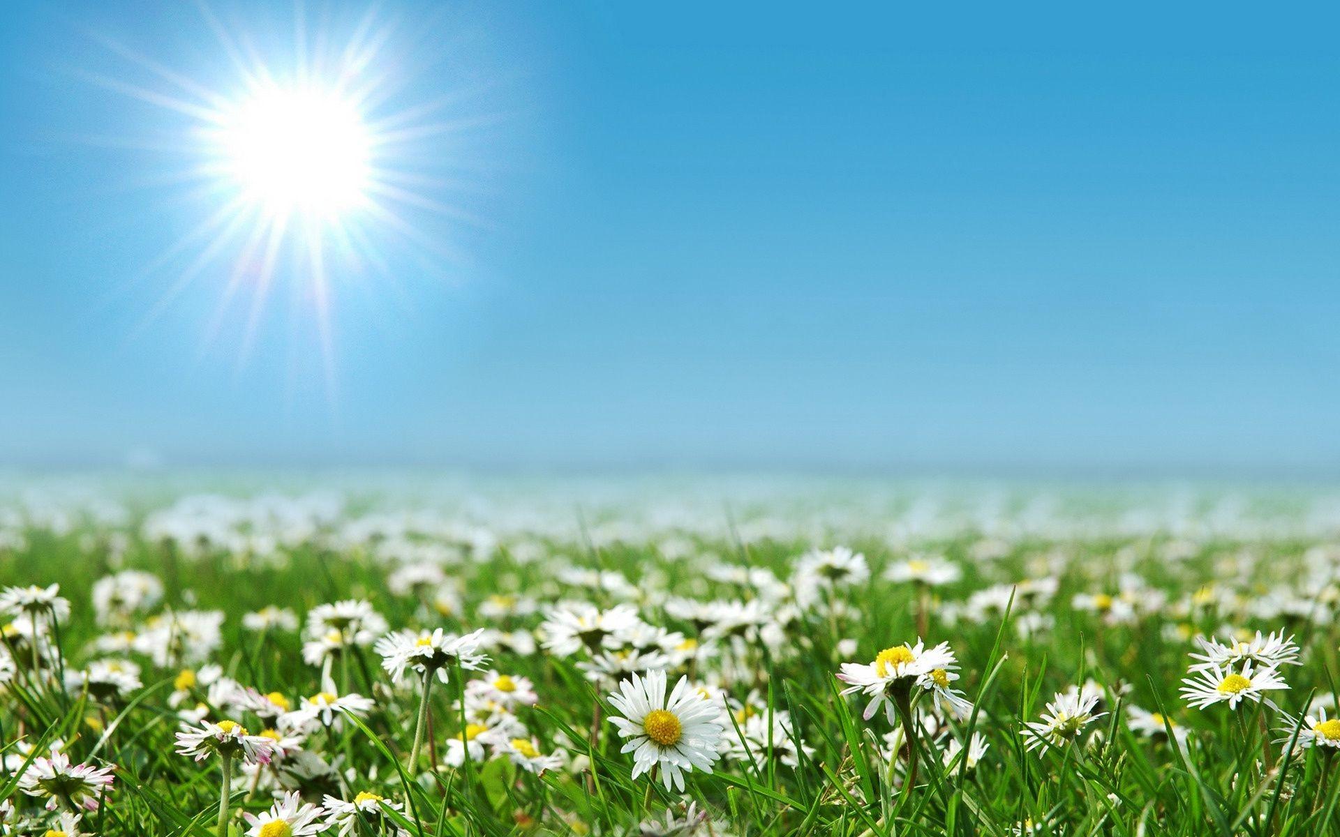 природа цветы трава мельниц восход солнце  № 2556723 без смс