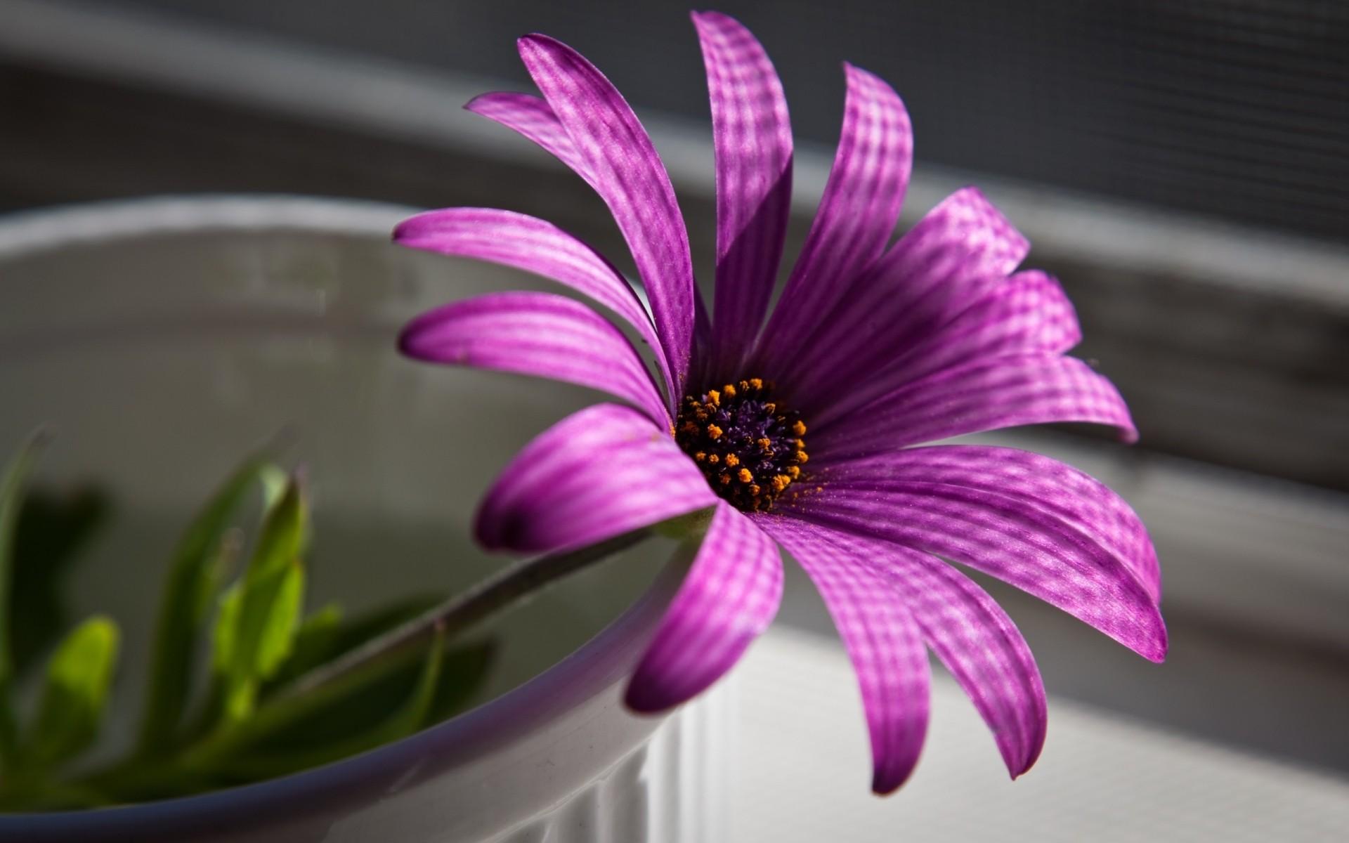 Цветы картинки на рабочий стол андроид