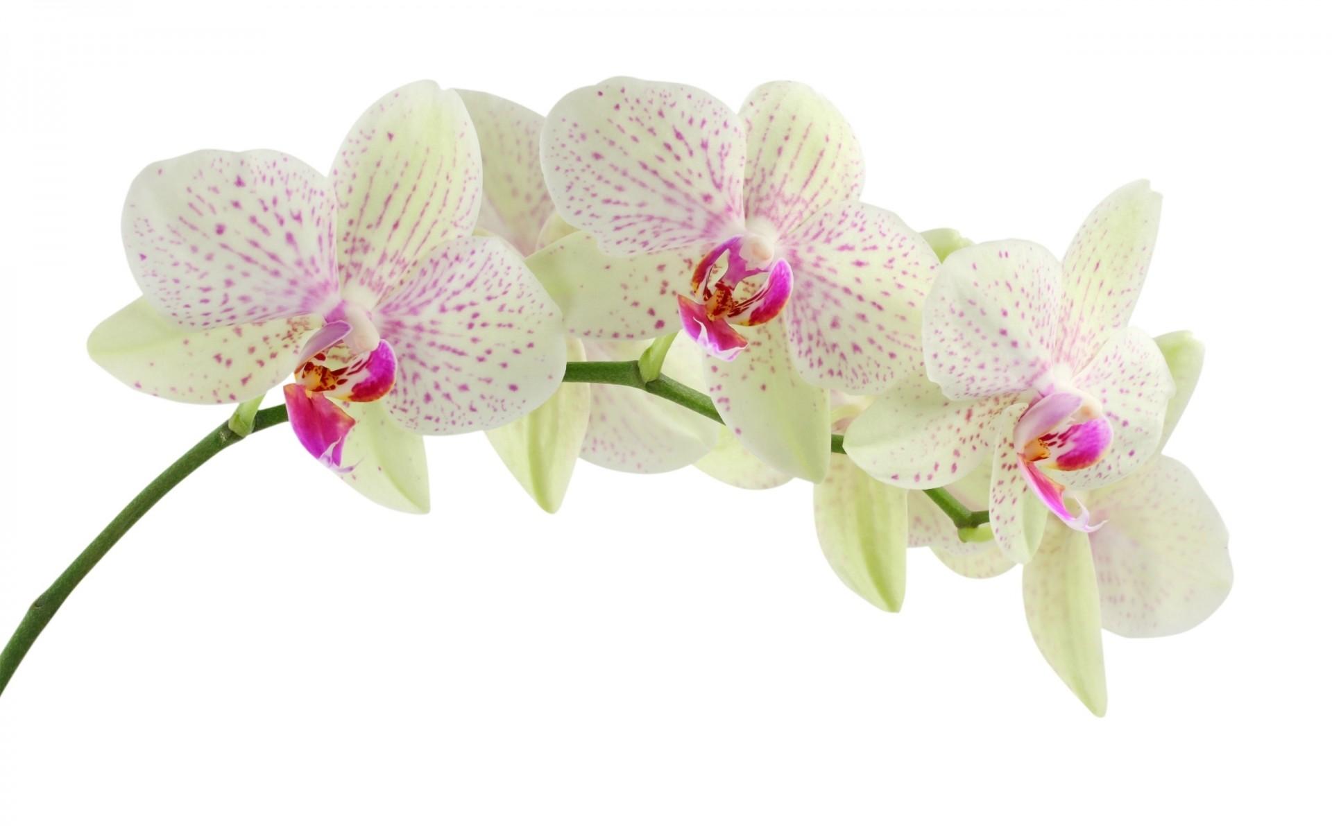 Красивые цветы картинки орхидеи, прикольные картинки