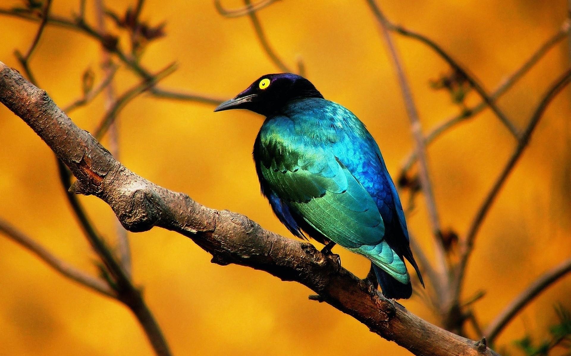 День, картинки красивых животных и птиц