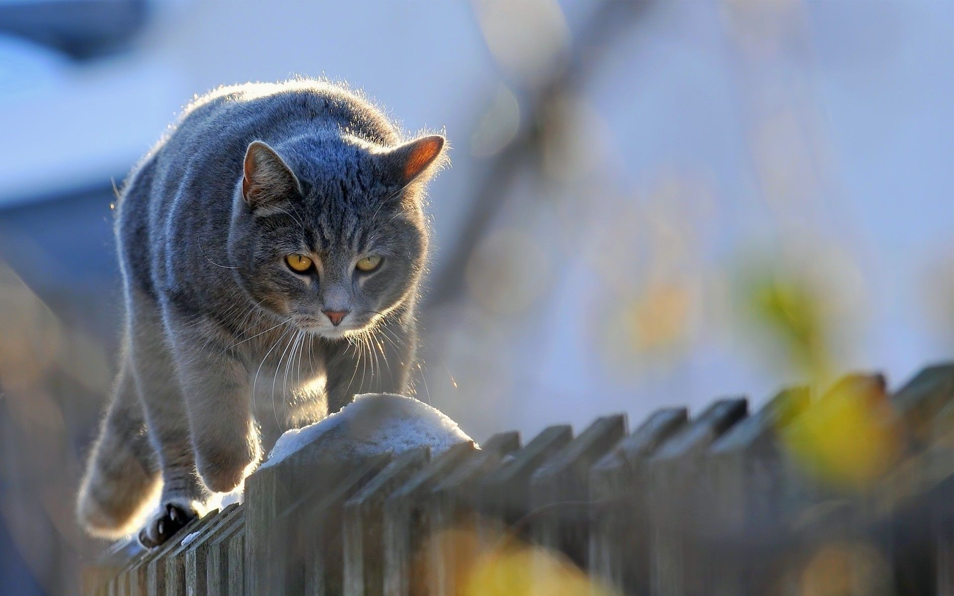 Кот забор под забором загрузить
