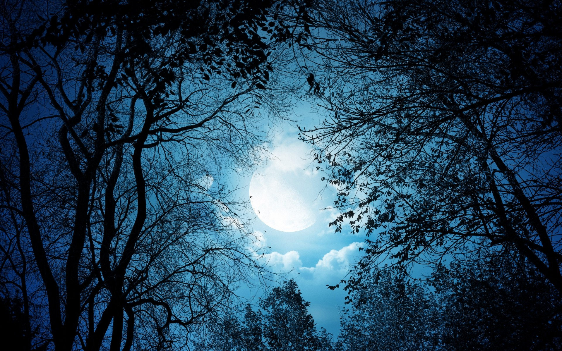 the moonlit night Download 1,863 moonlit night stock photos for free or amazingly low rates new users enjoy 60% off 76,516,065 stock photos online.