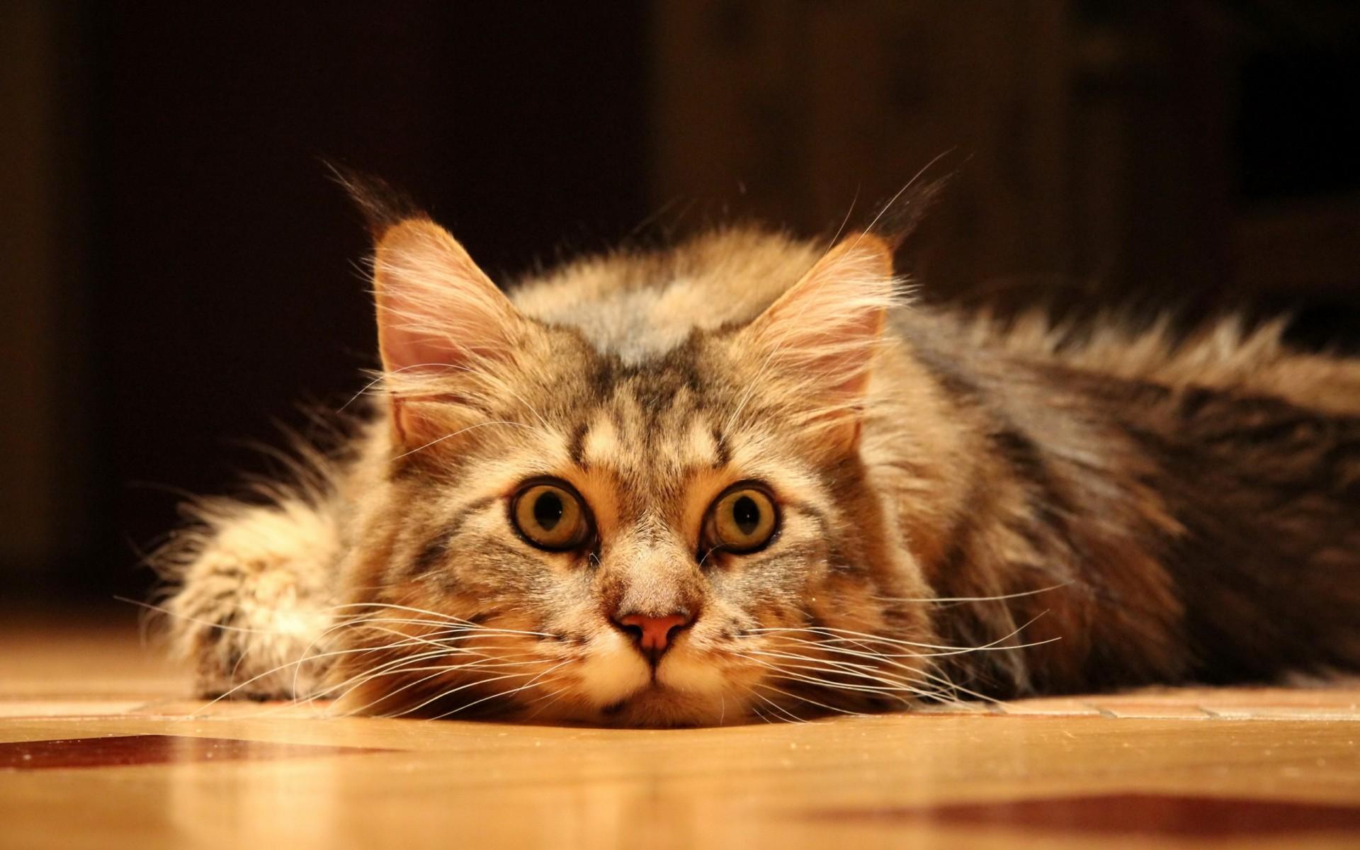 Картинки с котами прикольные на рабочий стол