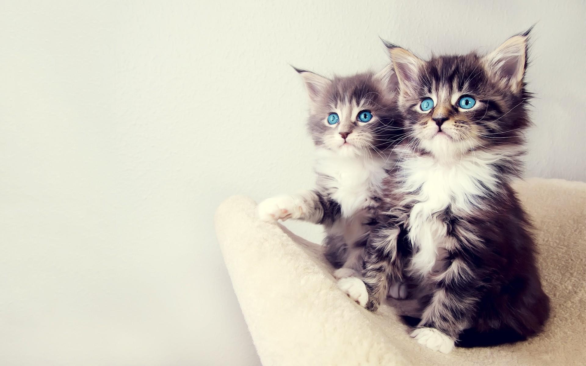 самый доступный картинки на телефон красивые живые обои котята кофта, чулки можно