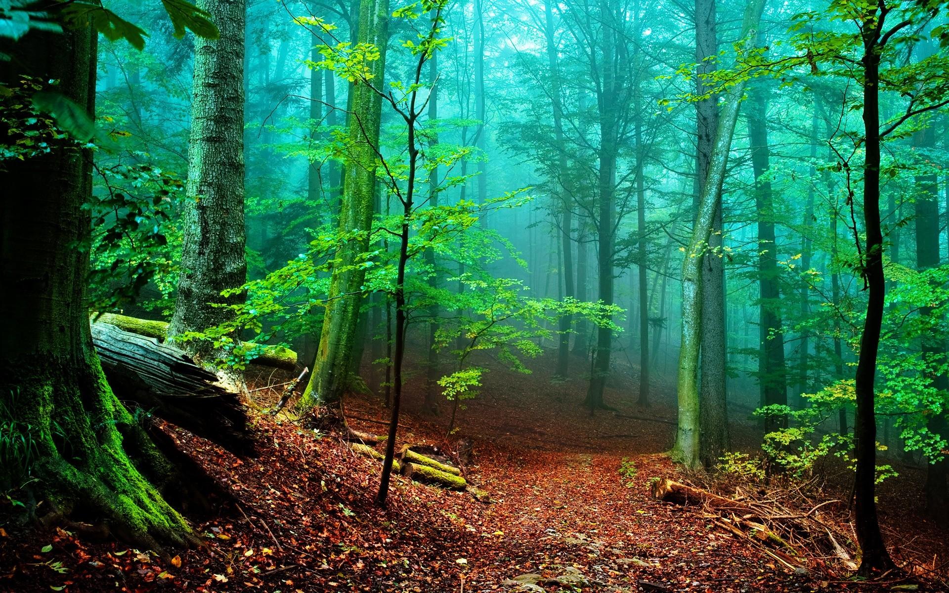 Живые Обои Лес