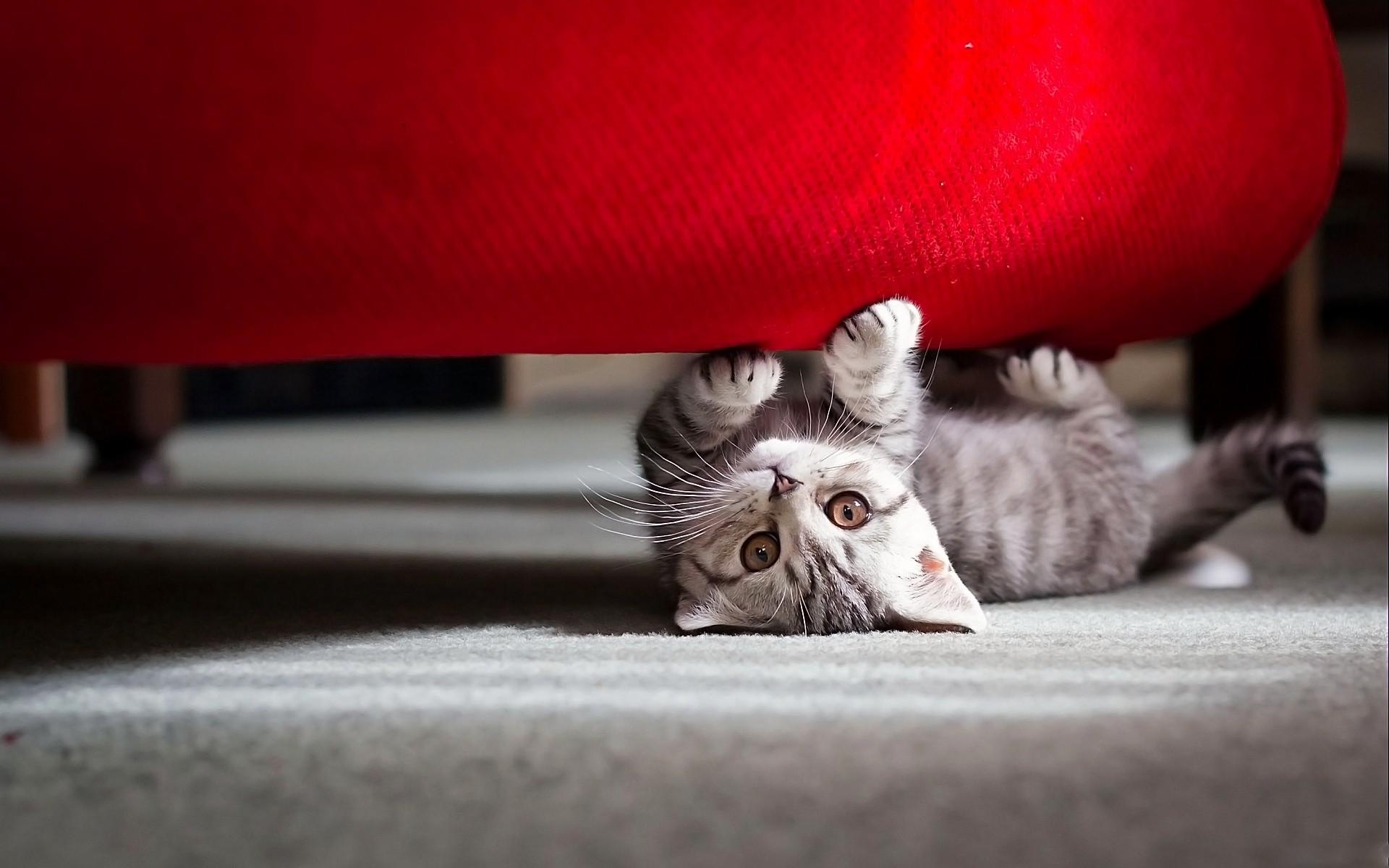 красный котенок во сне системы двух