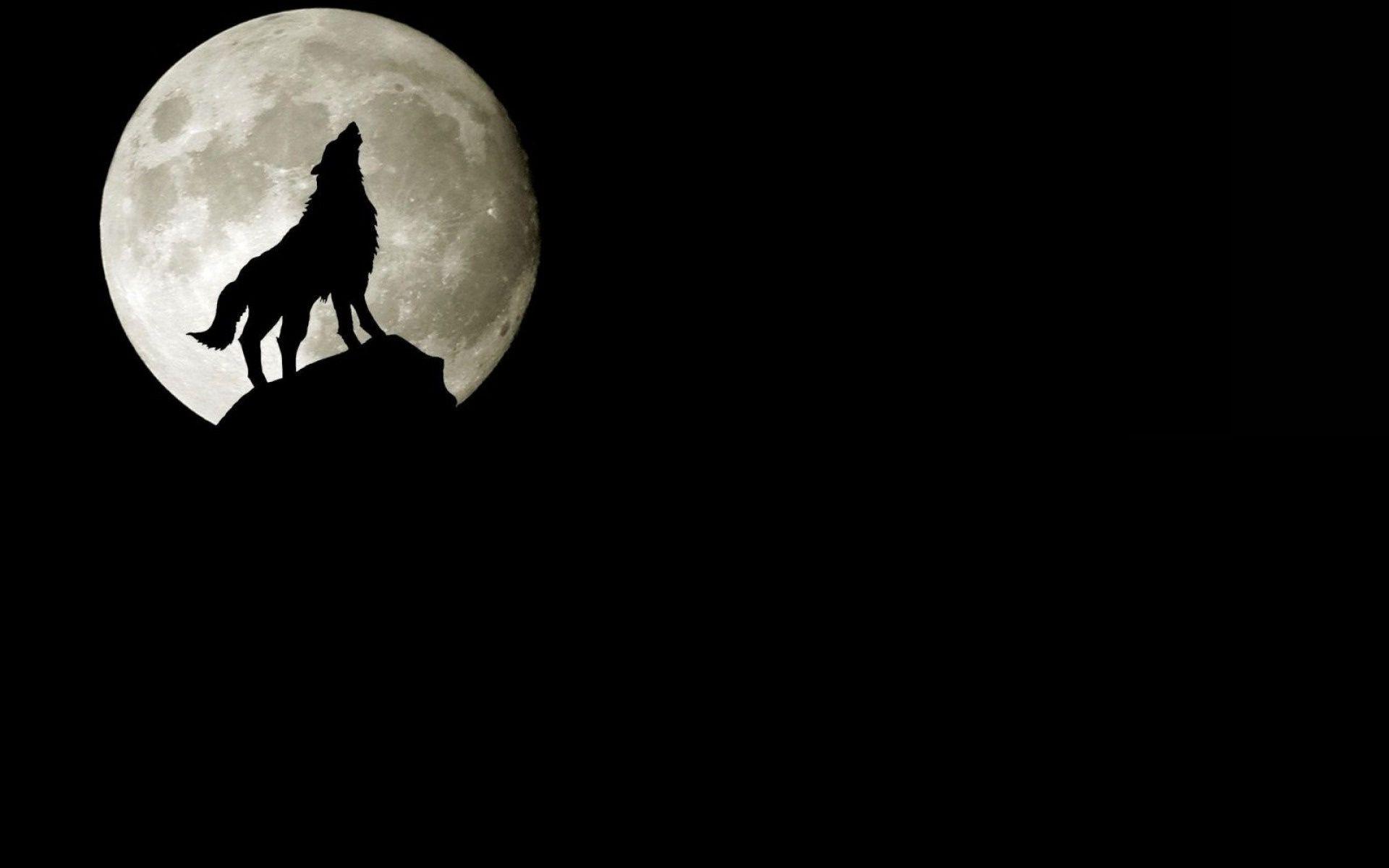 Воющий в ночи волк скачать