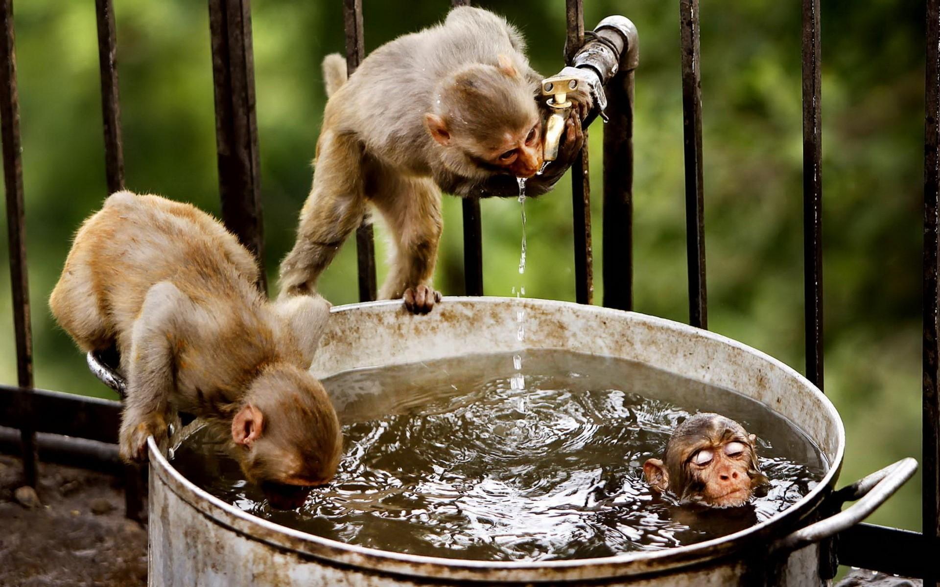 Идеи, интересные картинки с животными смешные