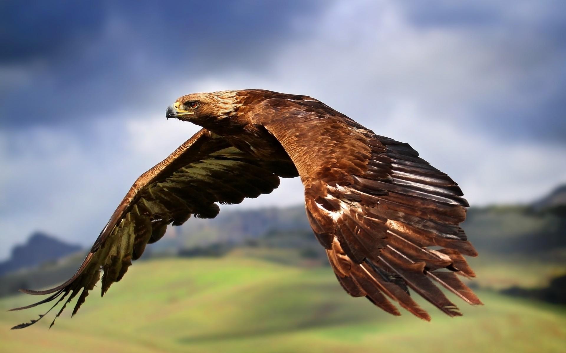поздравление с орел технике