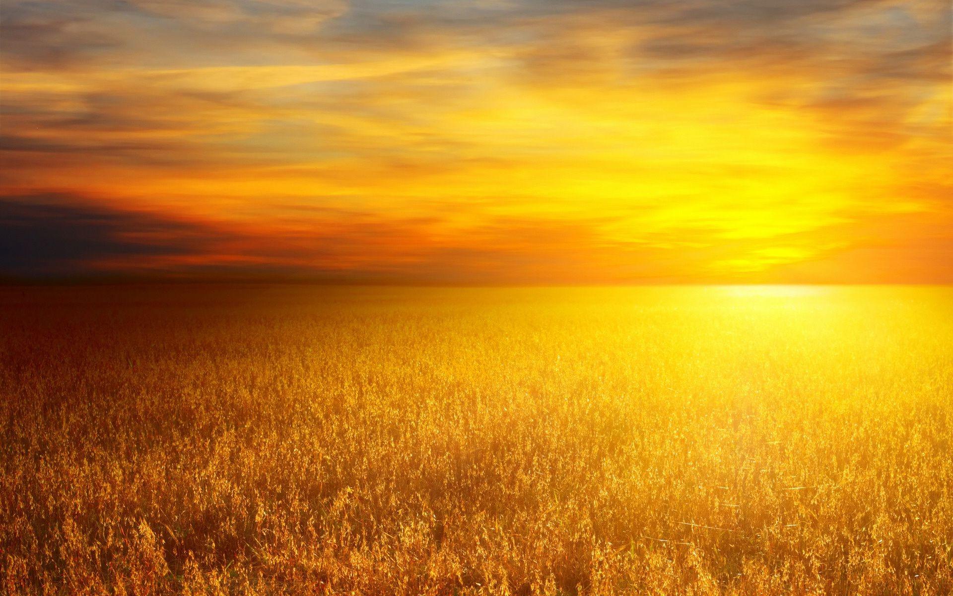 Пшеничное поле обои на рабочий стол